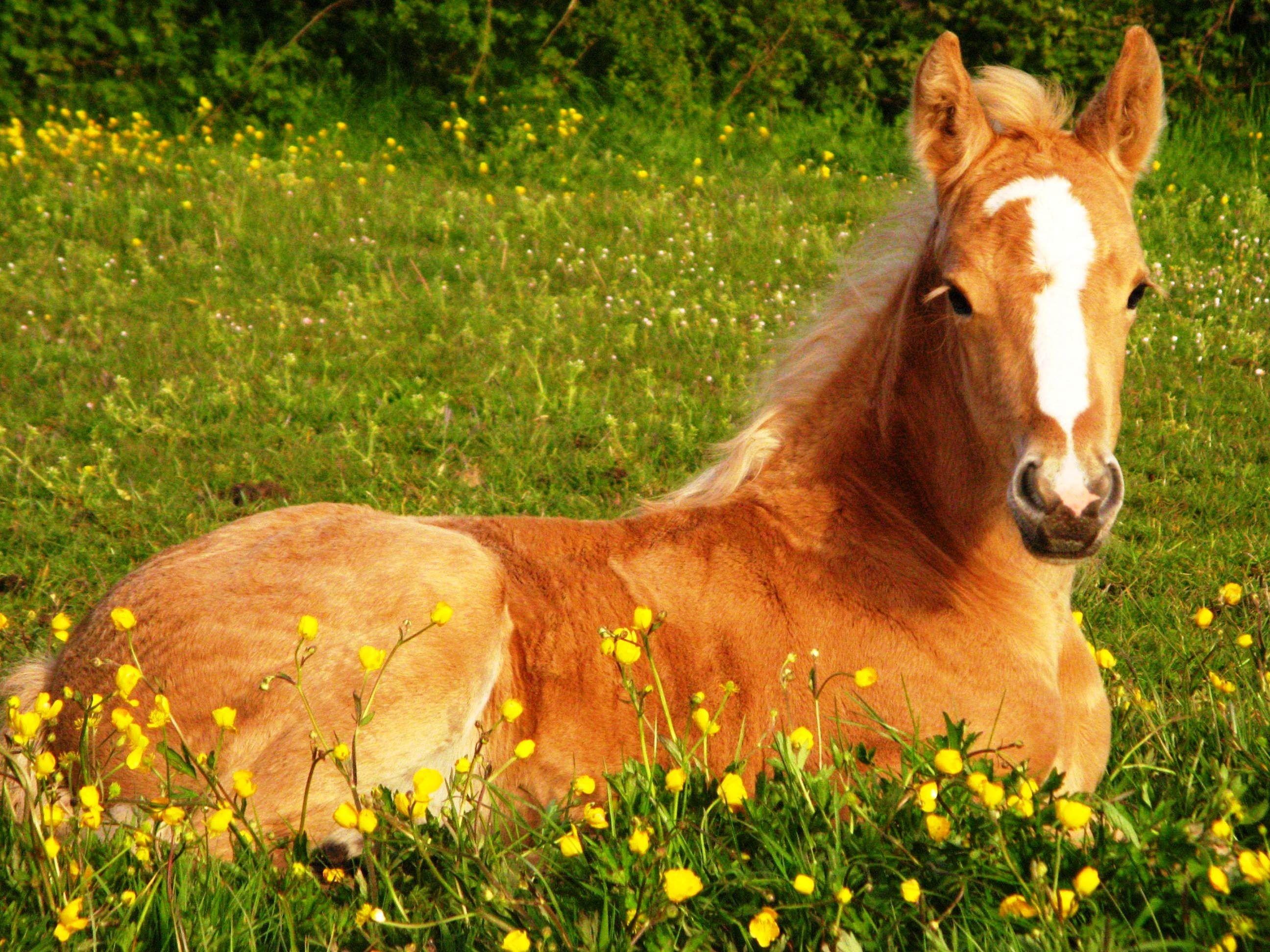 Res: 2592x1944, Cute Foals | Cute Horse Wallpapers - Wallpaper Cave