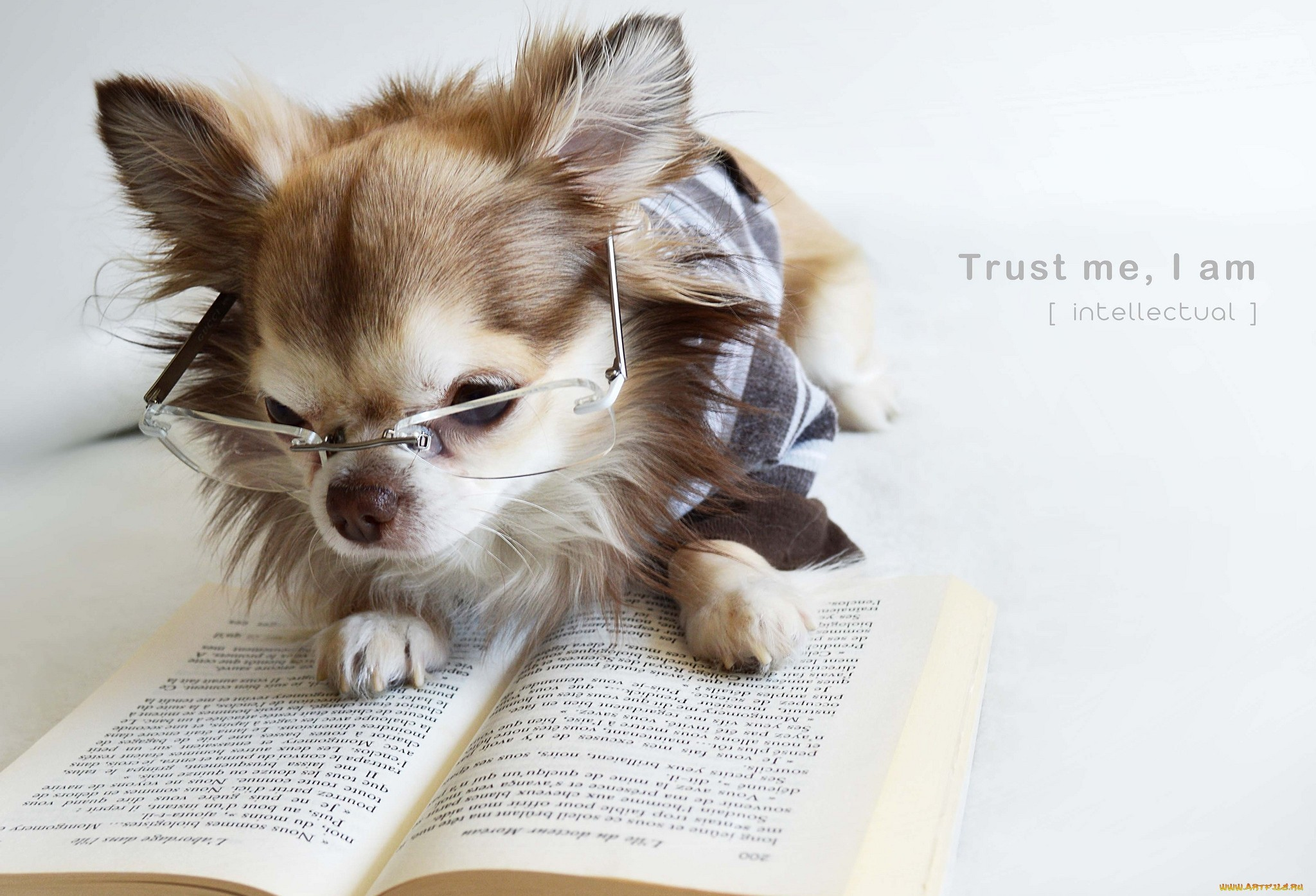 Res: 2048x1395, dog-reading-love-books-study-cute-images-animal-pics-mojly-com-9