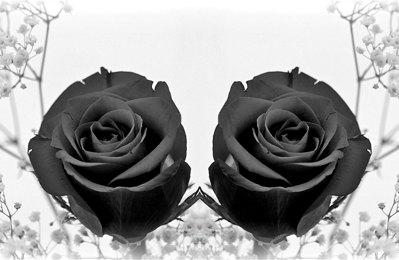Обои На Телефон Черные Розы
