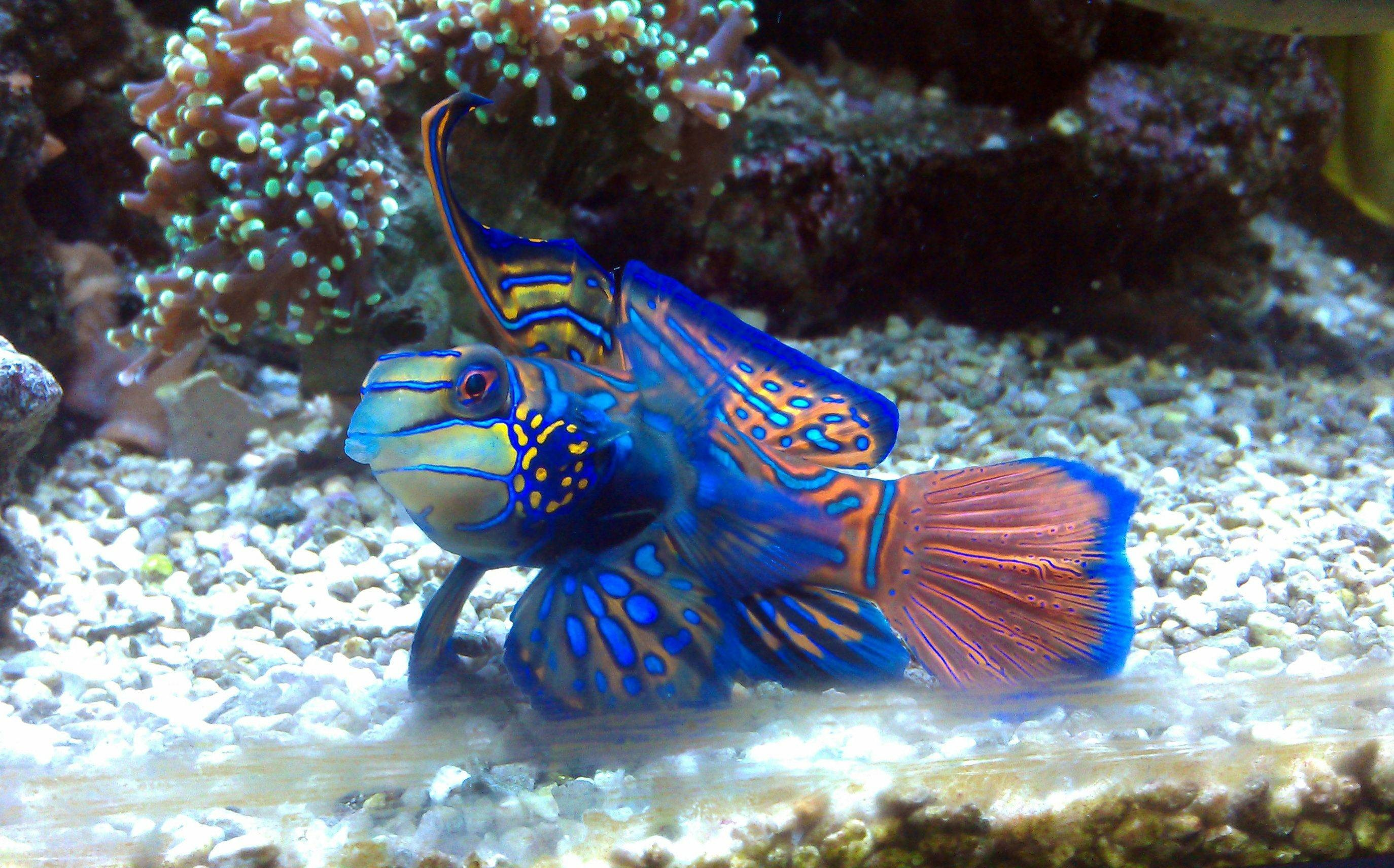 Res: 2748x1712, blue Saltwater Fish wallpaper
