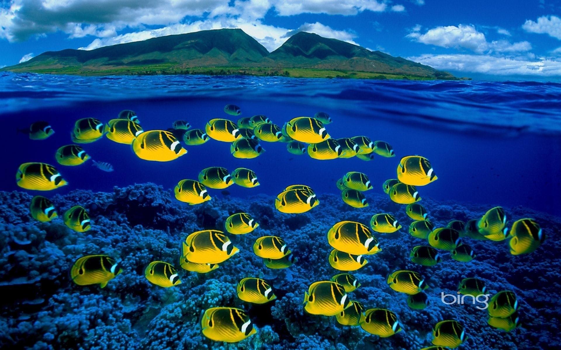 Res: 1920x1200, Maui, Hawaii, Underwater, Reef, Corals, Fish, Sea, Saltwater,