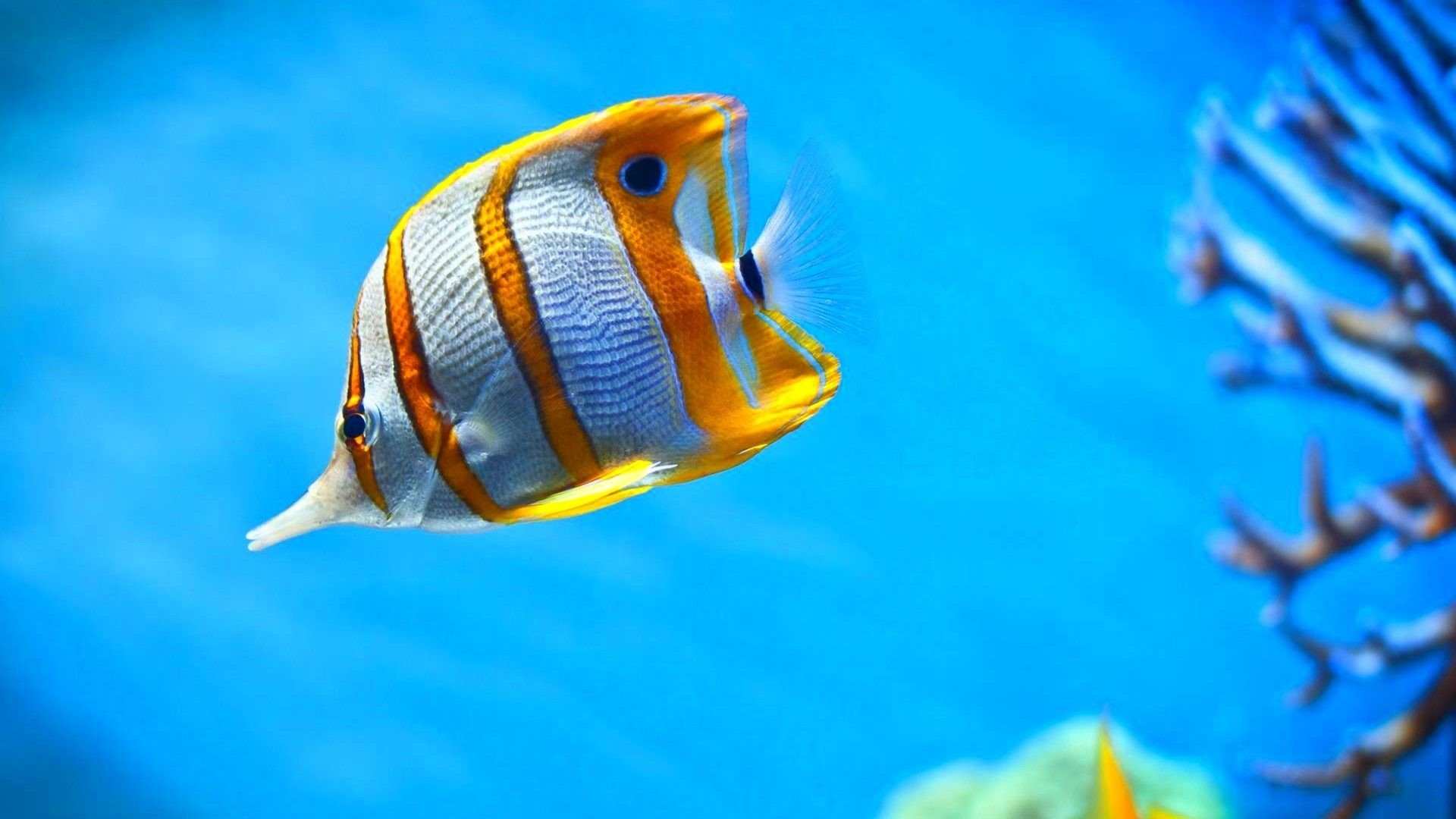 Res: 1920x1080, Fish Ocean Underwater Nature Sea Sealife Fishes Wallpapers Images