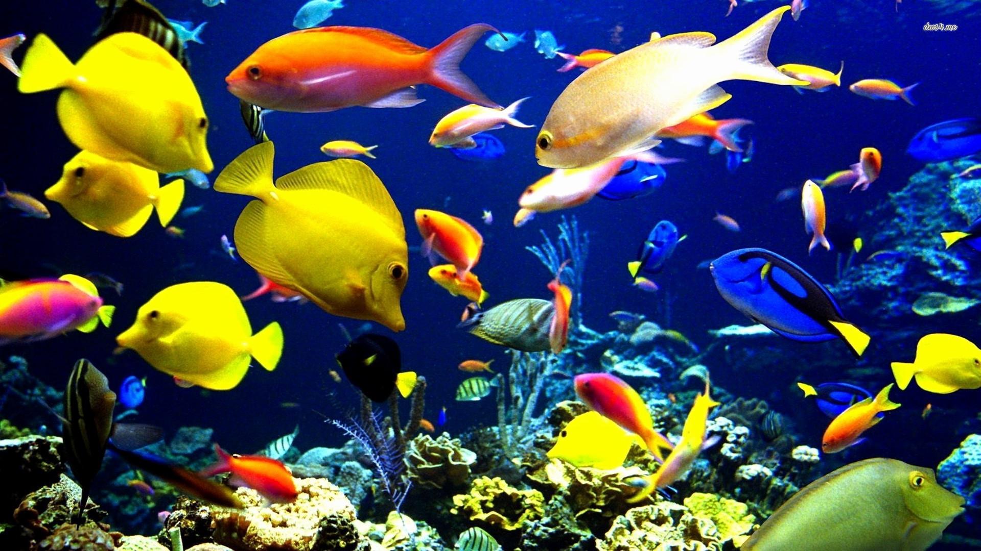 Res: 1920x1080, Live Fish Wallpaper Best Of Fish Impremedia