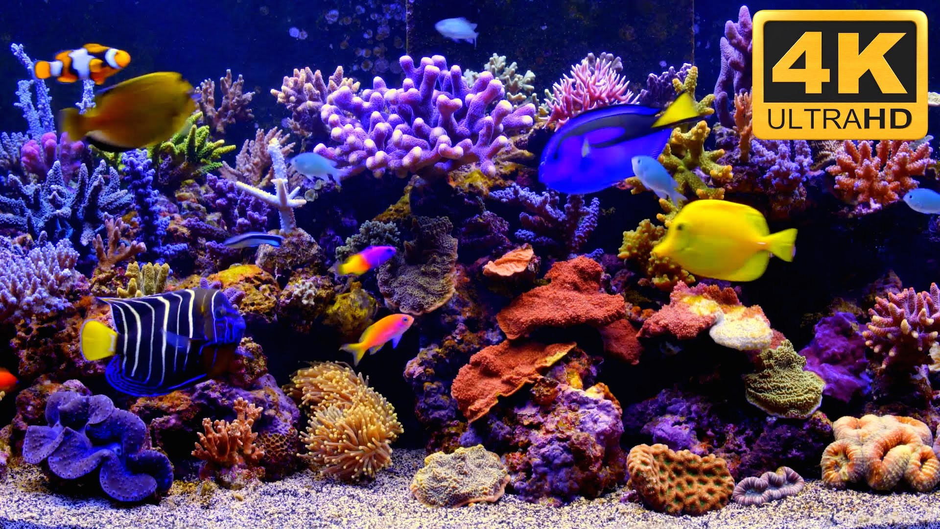 Res: 1920x1080, ... THE BEST 4K Aquarium Video ***** - YouTube