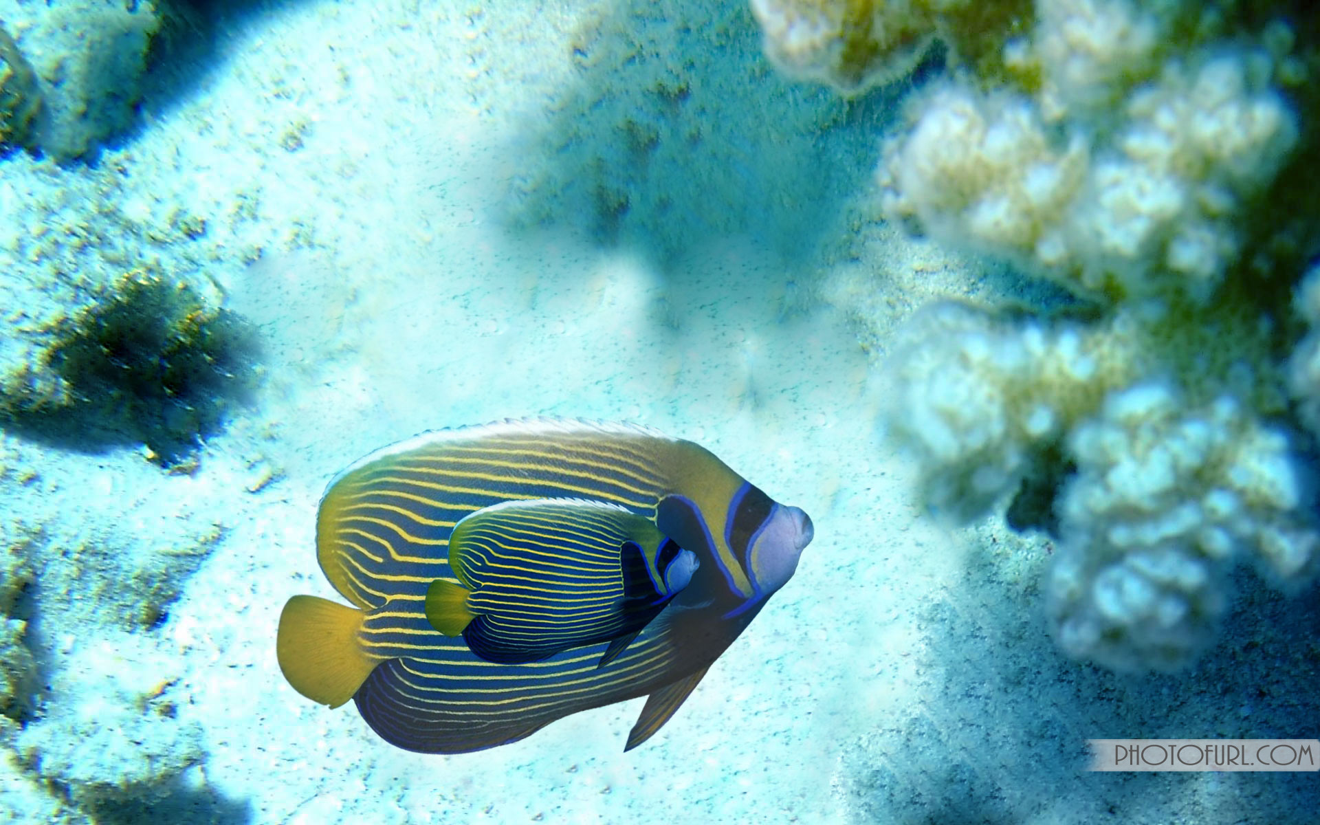 Res: 1920x1200, Preview Saltwater Fish Pics by Gilroy Gustus