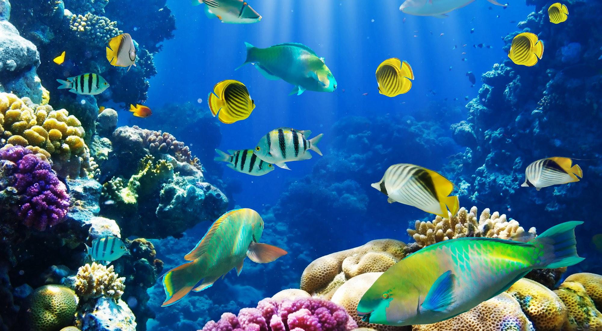 Res: 2000x1100, Animal - Fish Animal Tropical Fish Tropical Ocean Underwater Butterflyfish  Wallpaper