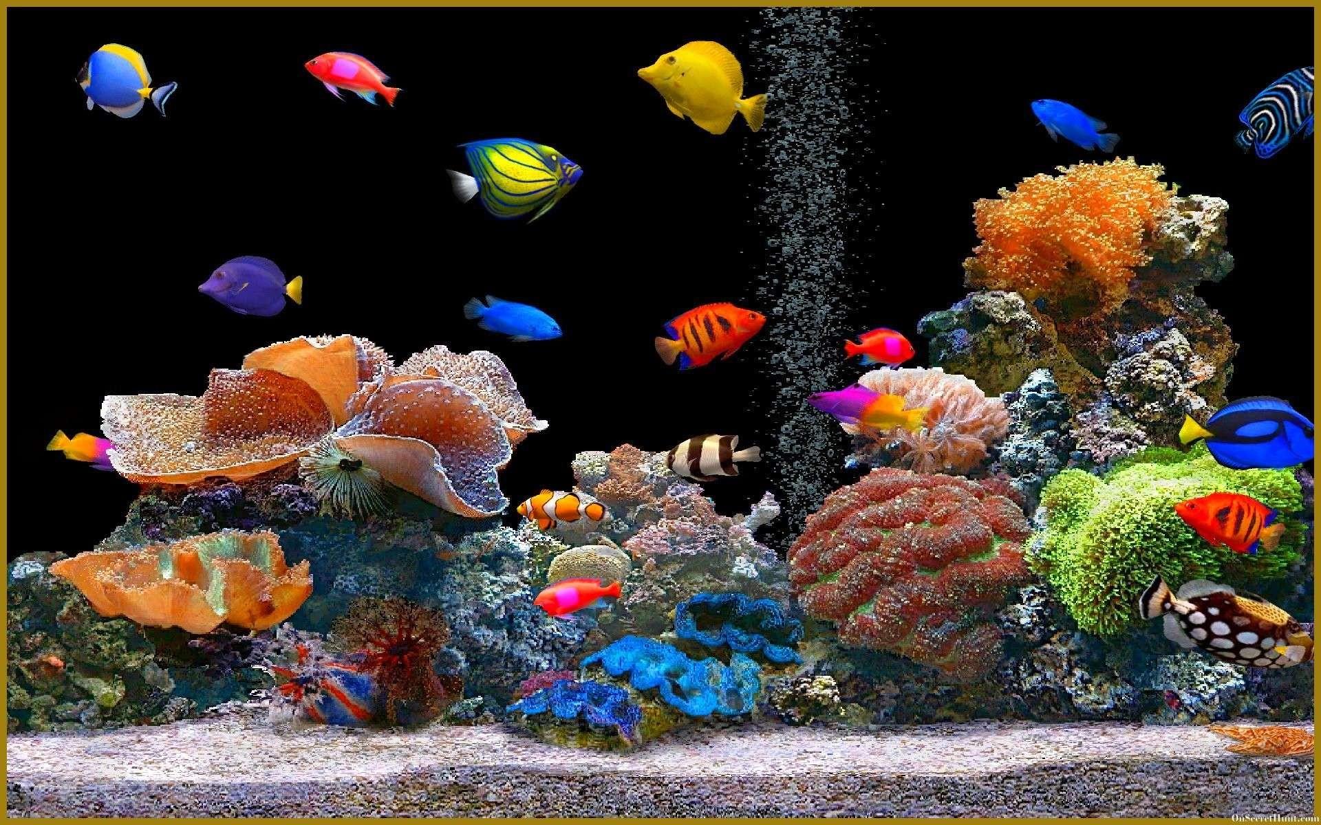 Res: 1920x1200, KY765: Free Aquarium Desktop Wallpaper, , by Devora Penniman