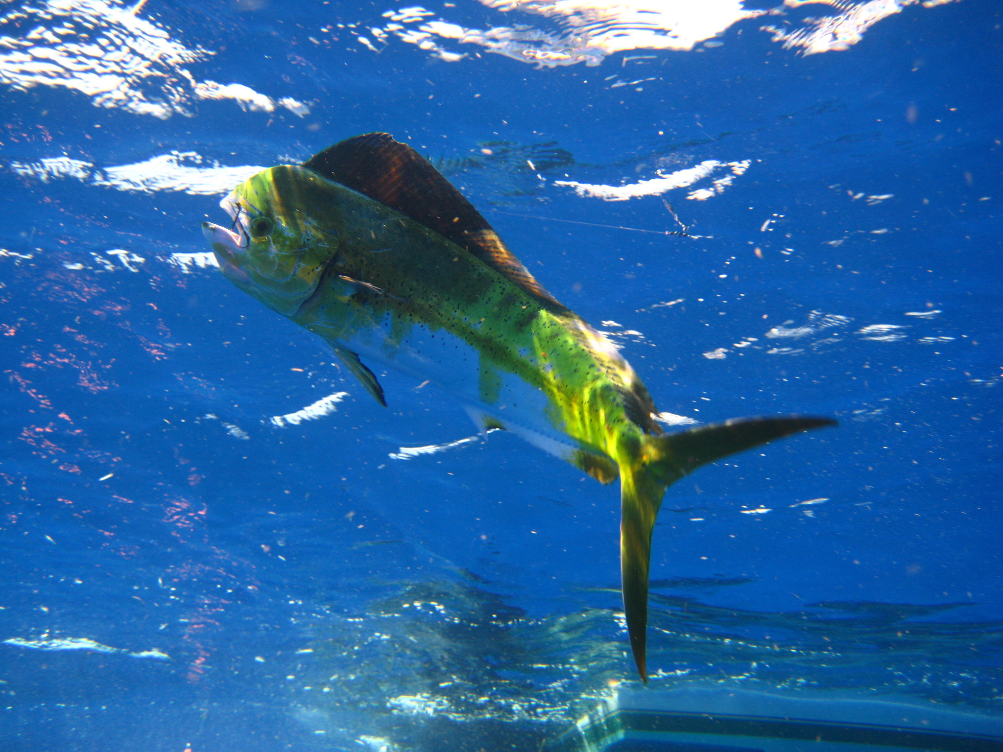 Res: 2048x1536, Fishing Types Islamorada Flats Fishing with Islamorada Fishing Guide