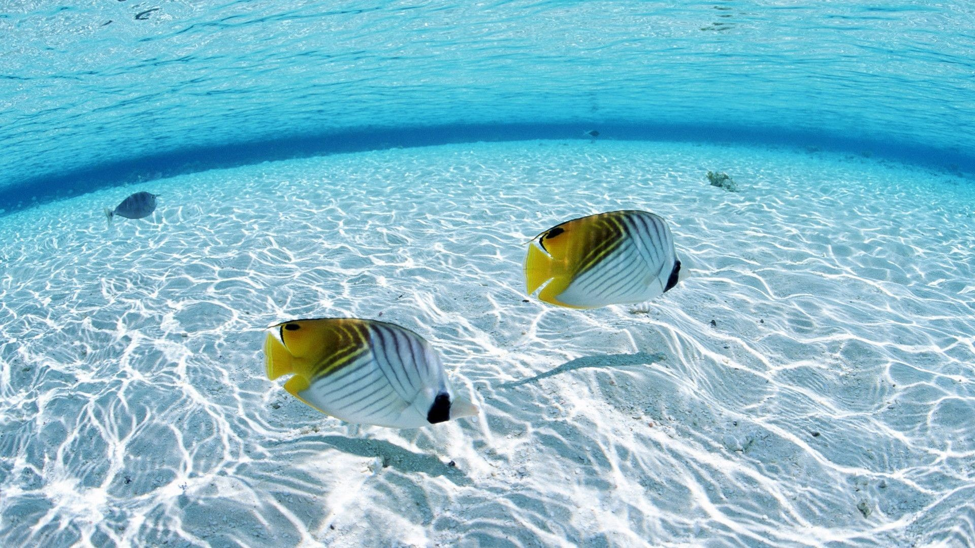 Res: 1920x1080, 234039081 Tropical Fish Wallpapers – Tropical Fish Backgrounds