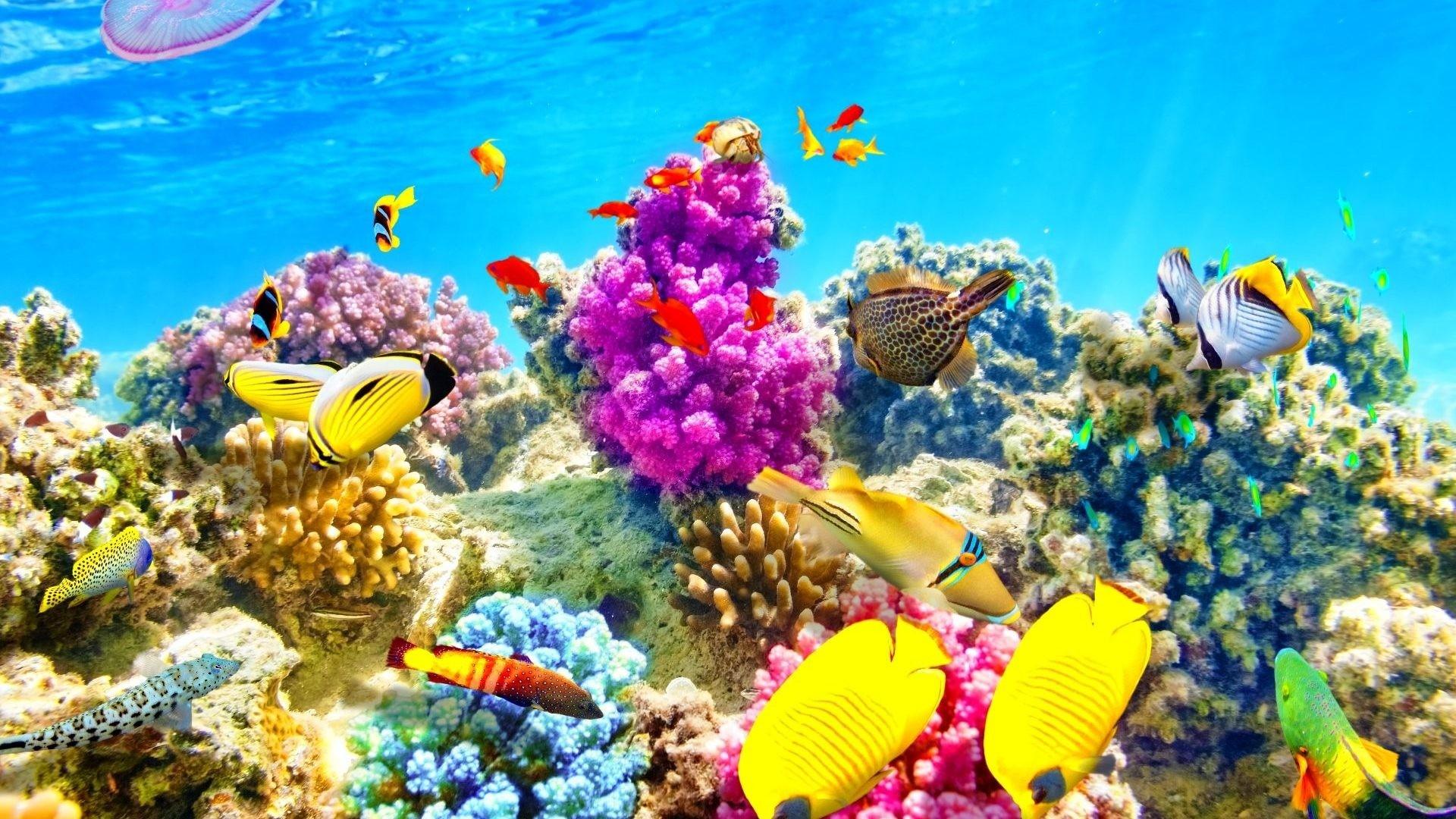 Res: 1920x1080, Fishes Sealife Nature Fish Ocean Sea Underwater Image Clown