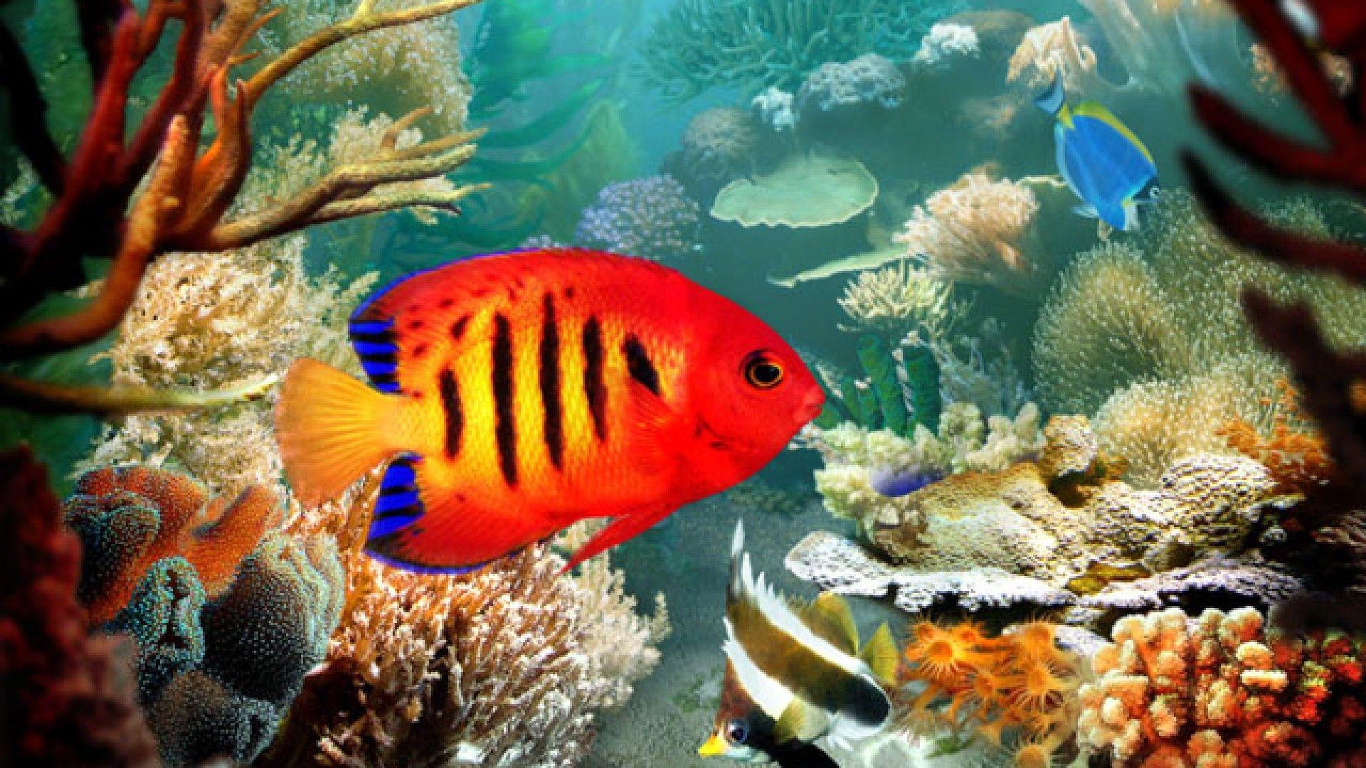 Res: 1920x1080, Homepage » Fish » Tropical Fish 3D wallpaper