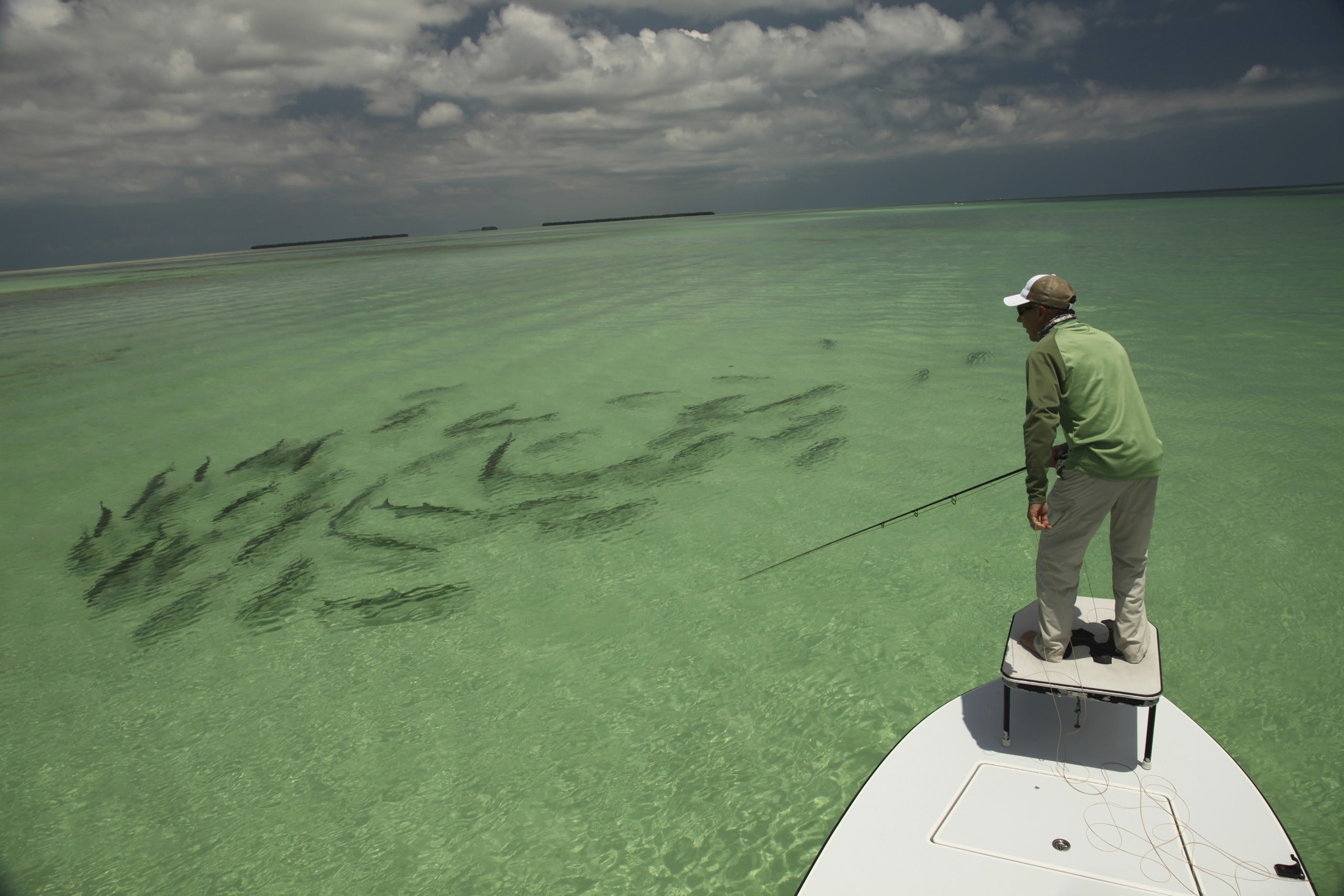 Res: 2560x1707, Back Pix For Saltwater Fly Fishing Art