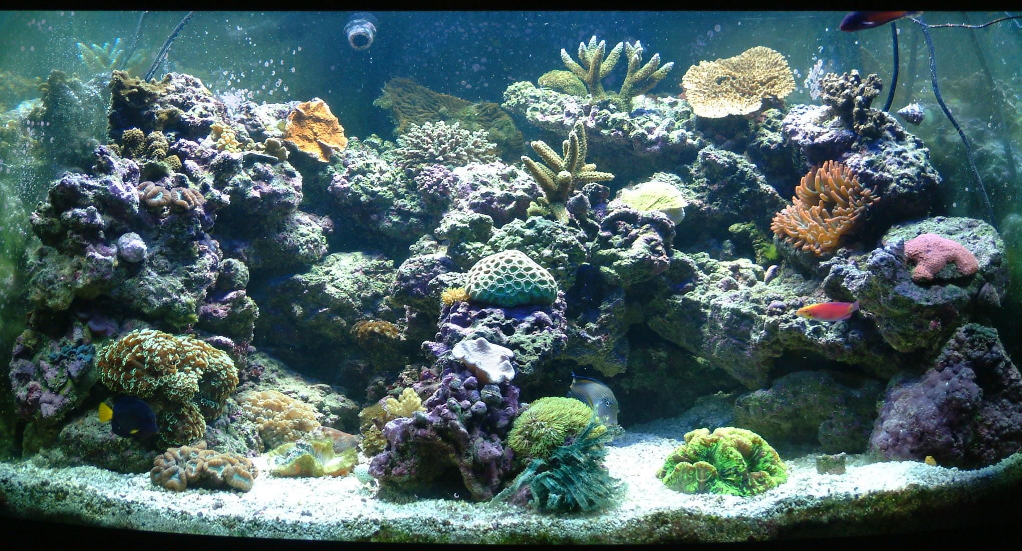 Res: 2040x1100, buy live tropical fish 3D