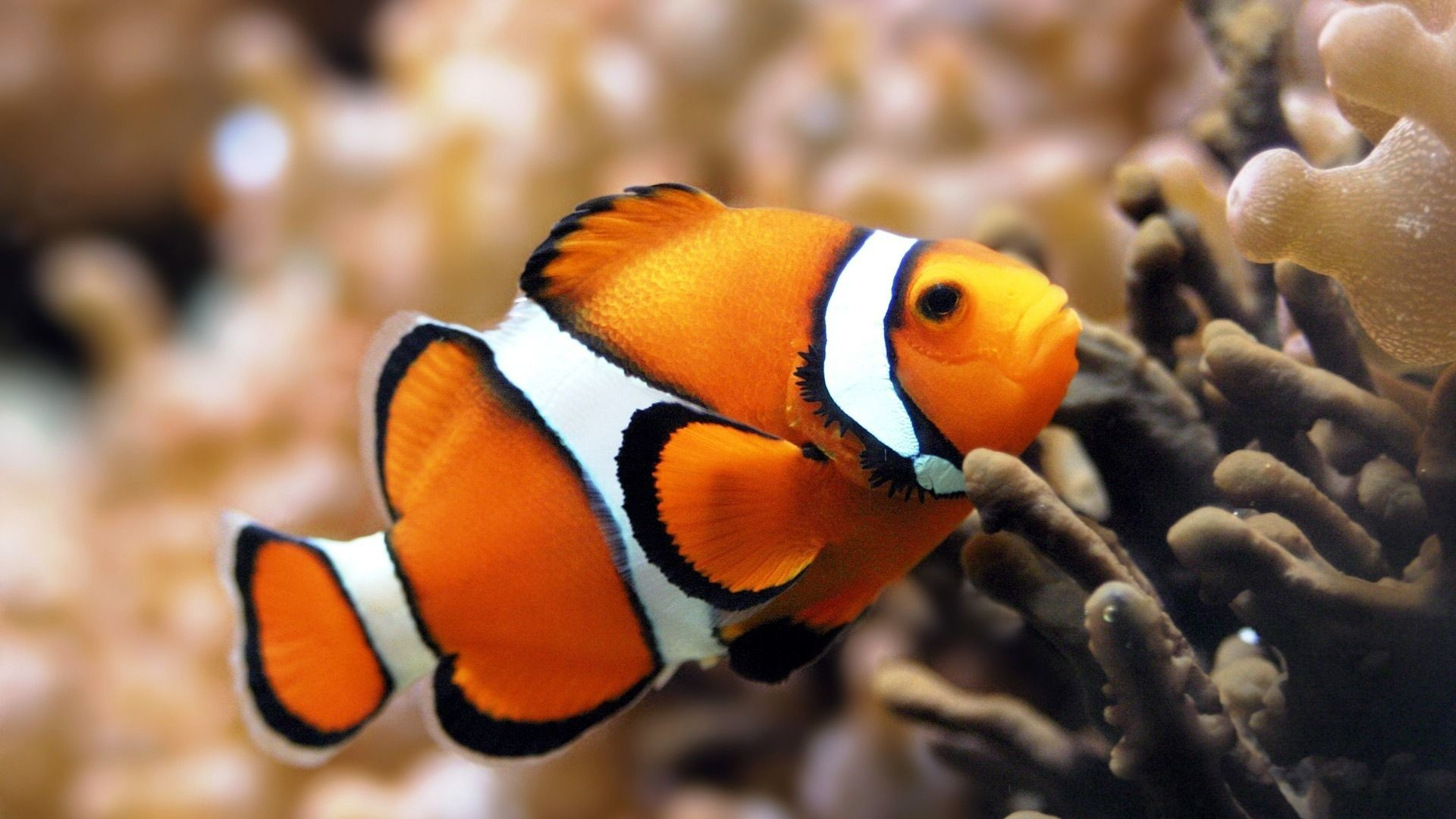 Res: 1920x1080, Full HD 1080p Fish Wallpapers HD, Desktop Backgrounds