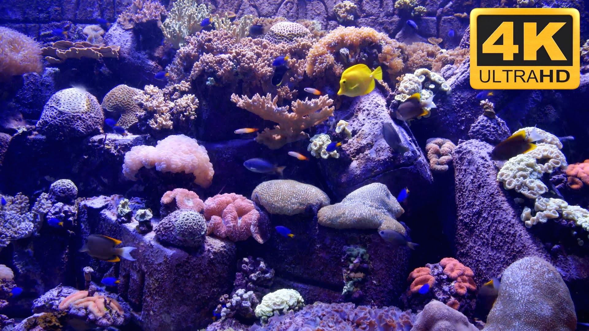 Res: 1920x1080, ... 4K Aquarium Screensaver and TV Wallpaper ***** - YouTube