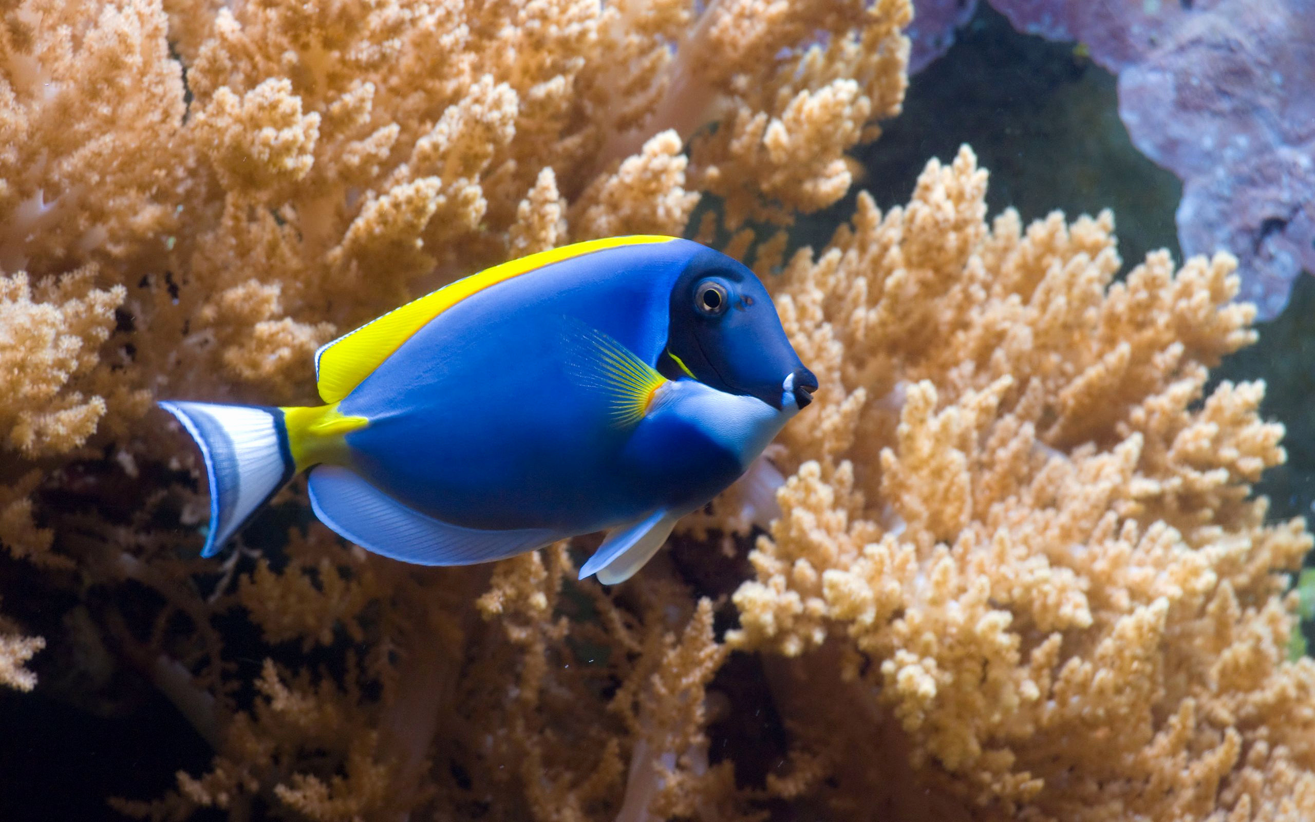 Res: 2560x1600, Live Fish Wallpaper Awesome Pin by Mark On Hd Wallpapers Pinterest