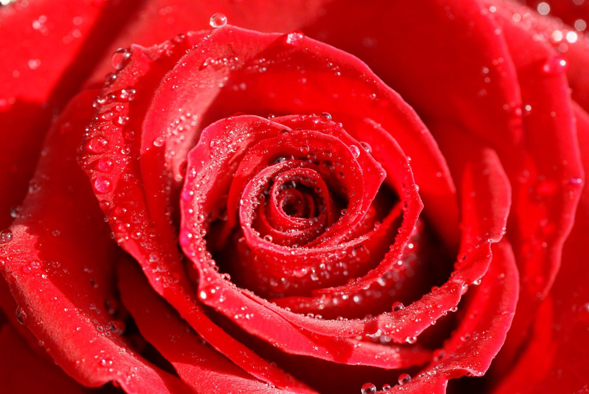 Res: 1920x1285, Best ideas about Rose Wallpaper on Pinterest Screensaver 1024×640 Roses Wallpaper (36 Wallpapers