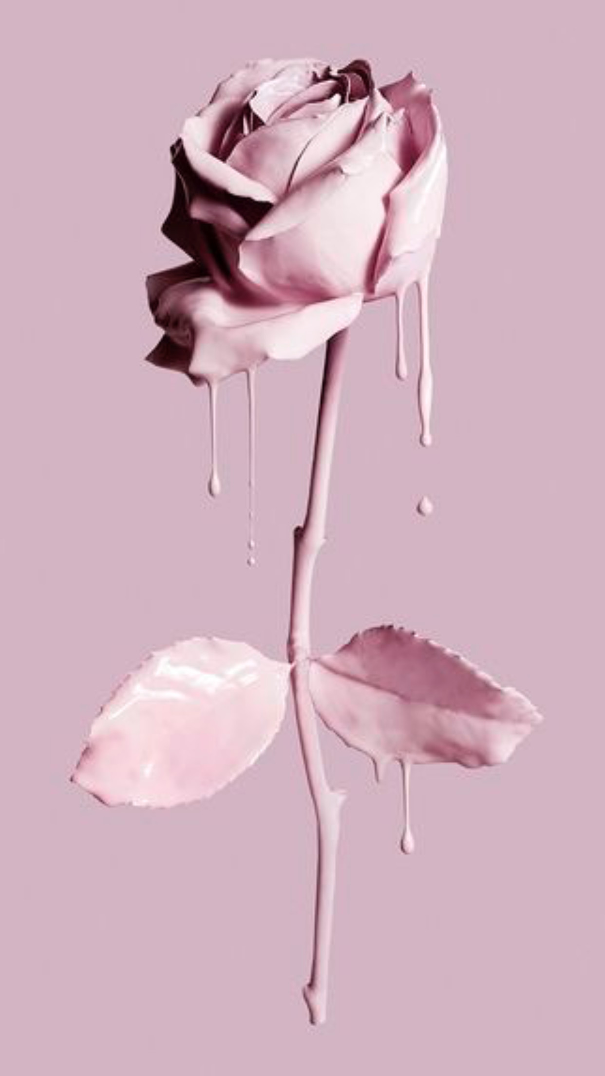 Res: 1242x2208, Painting the rose pink