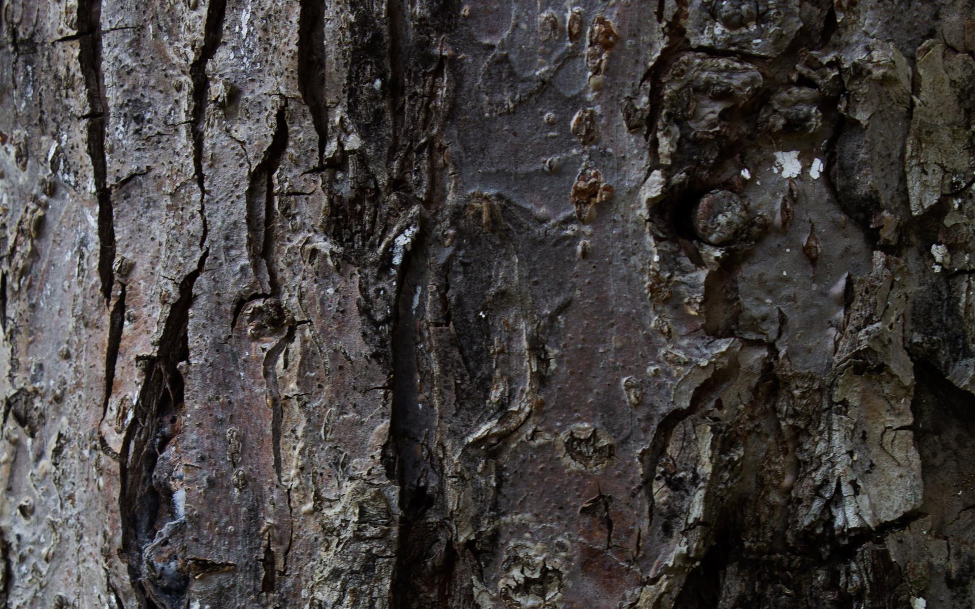 Res: 1920x1200, Tree Bark 26073