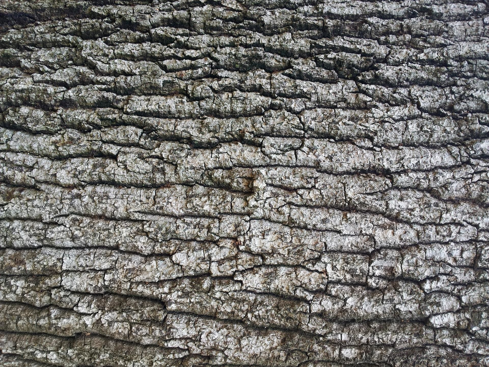 Res: 1920x1440, birch bark wallpaper #1472000