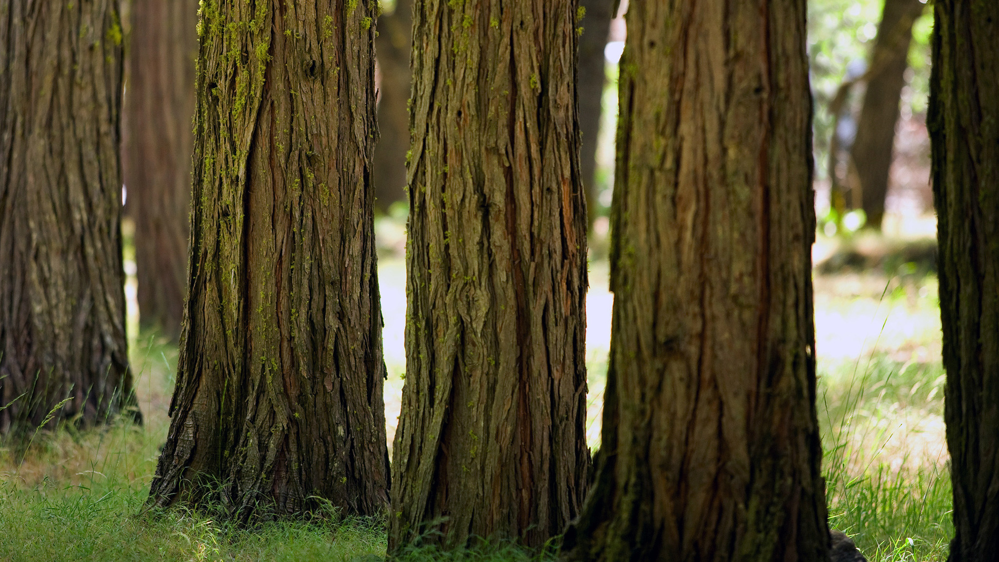 Res: 2048x1152, images tree bark | Tree Bark -  - 16:9