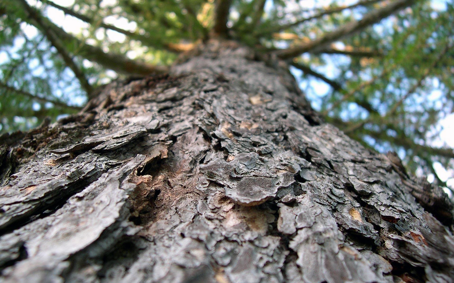 Res: 1920x1200, Free Tree Bark Wallpaper 26072