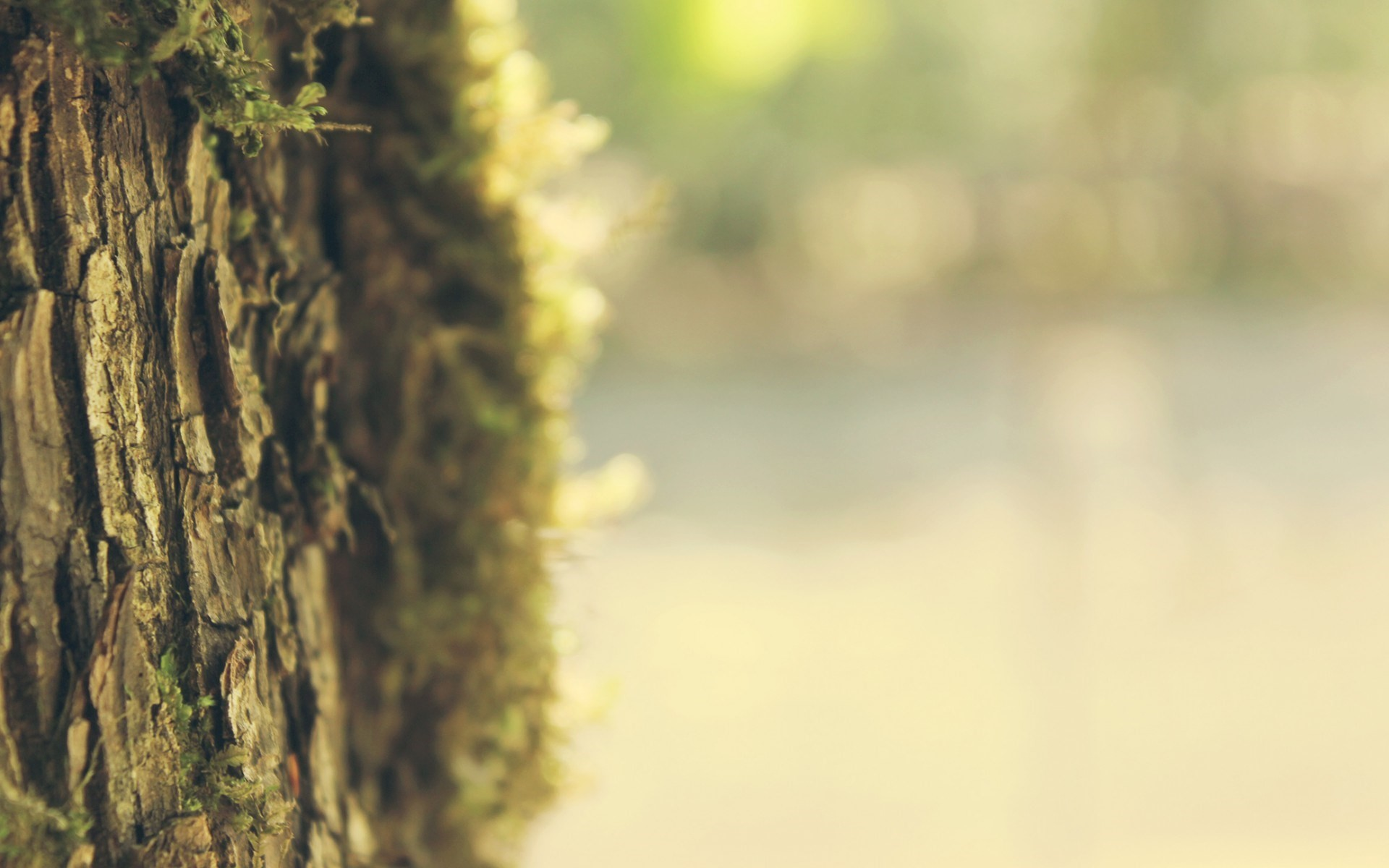 Res: 1920x1200, Tree bark wallpaper pictures