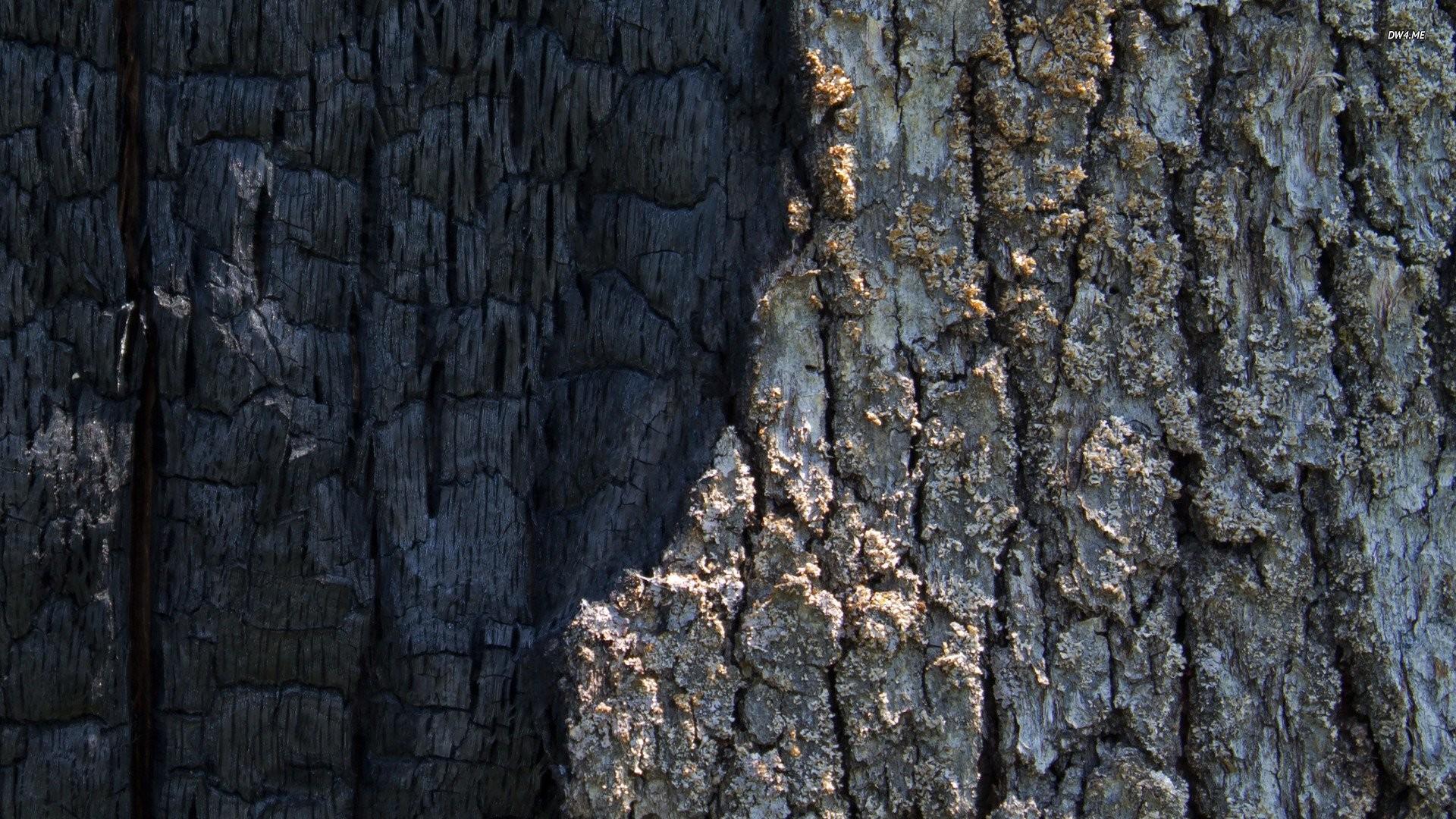 Res: 1920x1080, half burned tree bark 351292
