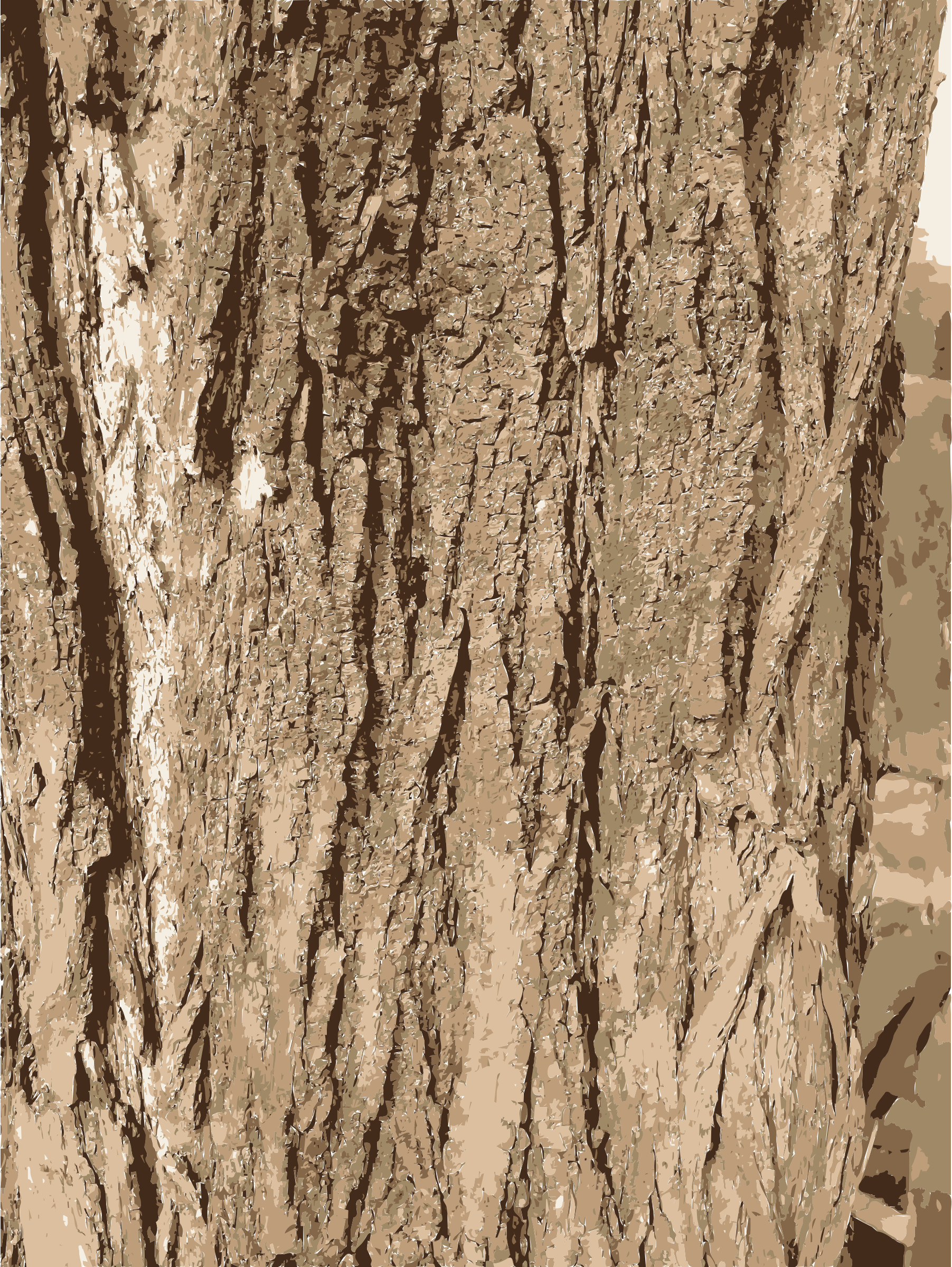 Res: 1803x2400, Tree Bark Stock Photos Images - HD Wallpapers