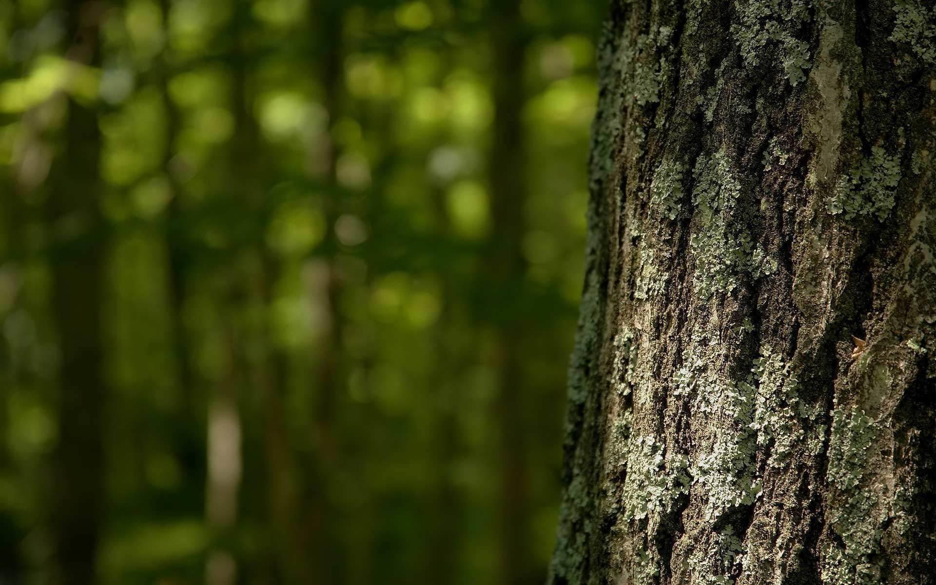 Res: 1920x1200, Tree bark wallpaper 1182