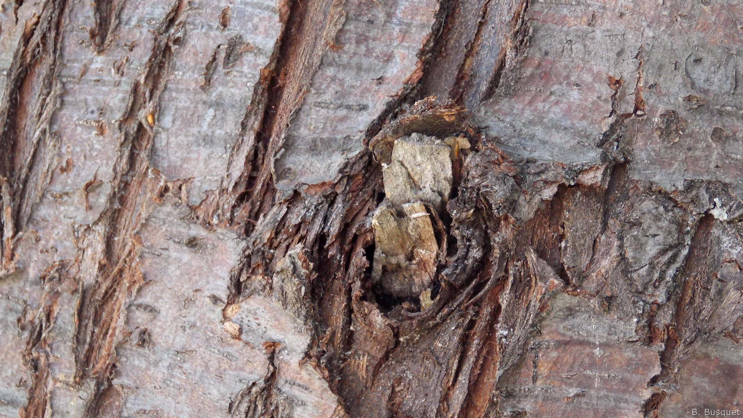Res: 2560x1440, Tree bark wallpaper