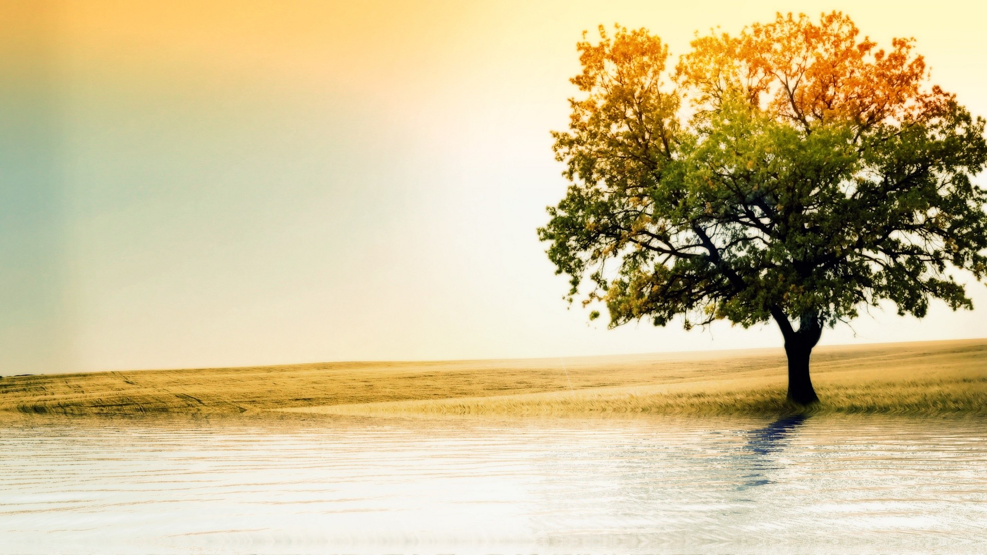 Res: 1920x1080, 40 HD Tree Wallpapers/Backgrounds For Free Download