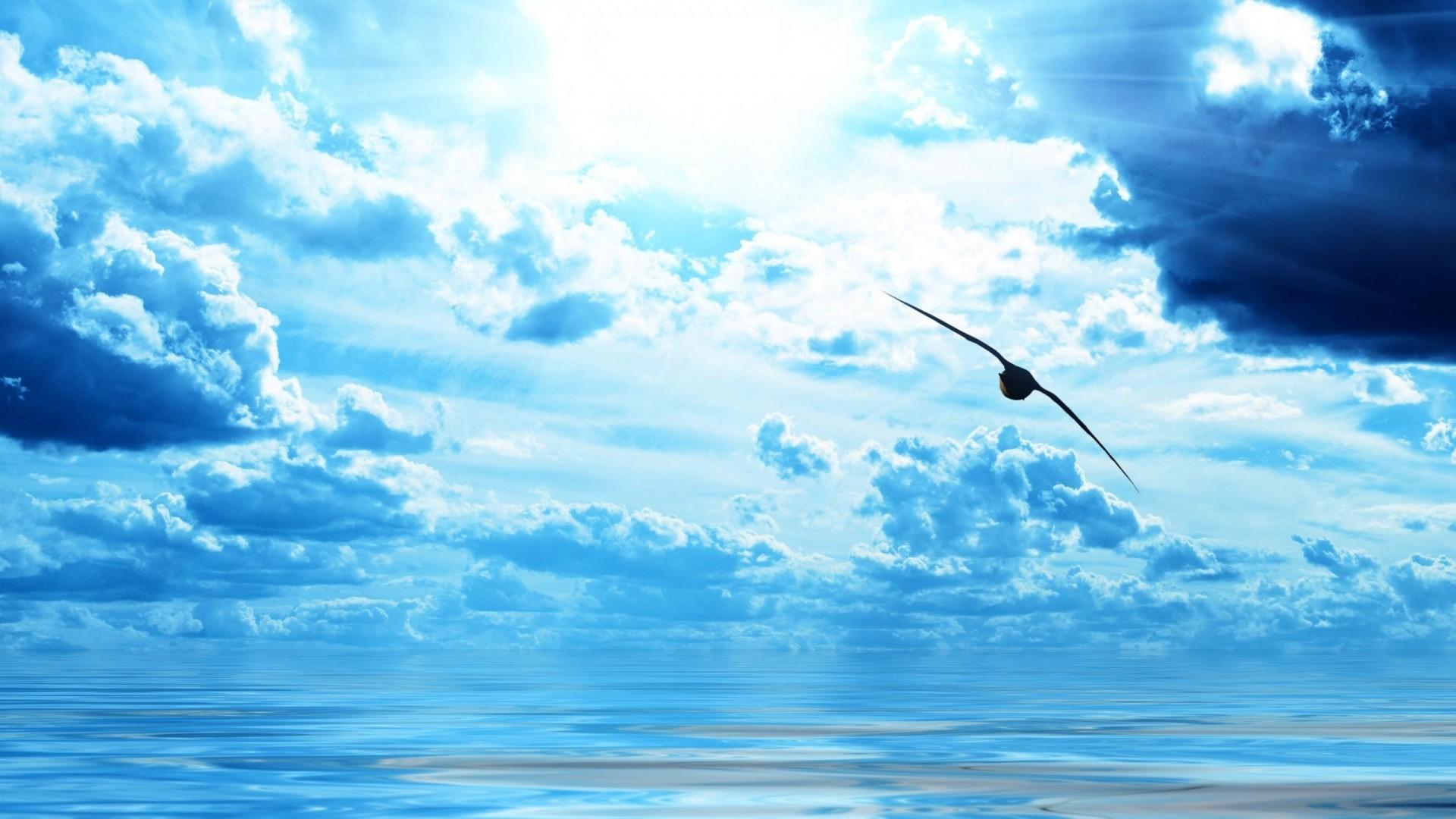 Res: 1920x1080, Bird over Ocean
