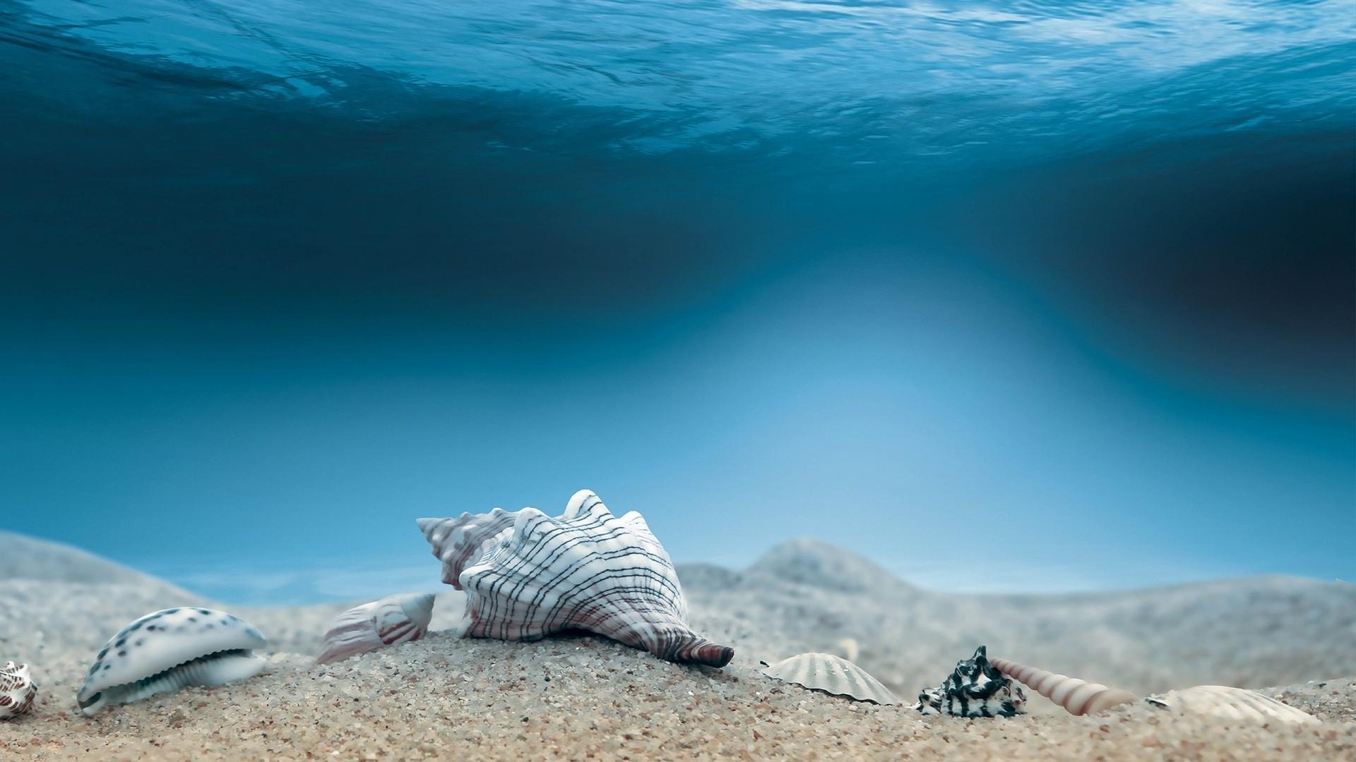 Res: 1920x1080, Ocean Sea Shells Digital Art HD Wallpaper
