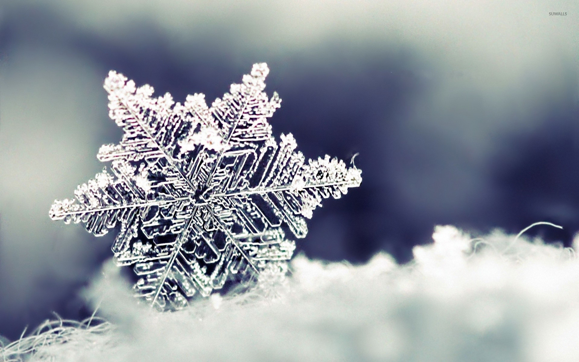 Res: 1920x1200, Snowflake wallpaper