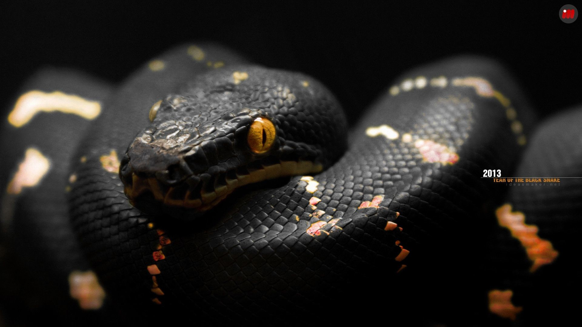 Res: 1920x1080, Snake HD Wallpapers Backgrounds Wallpaper 1600×1000 Black Snake .
