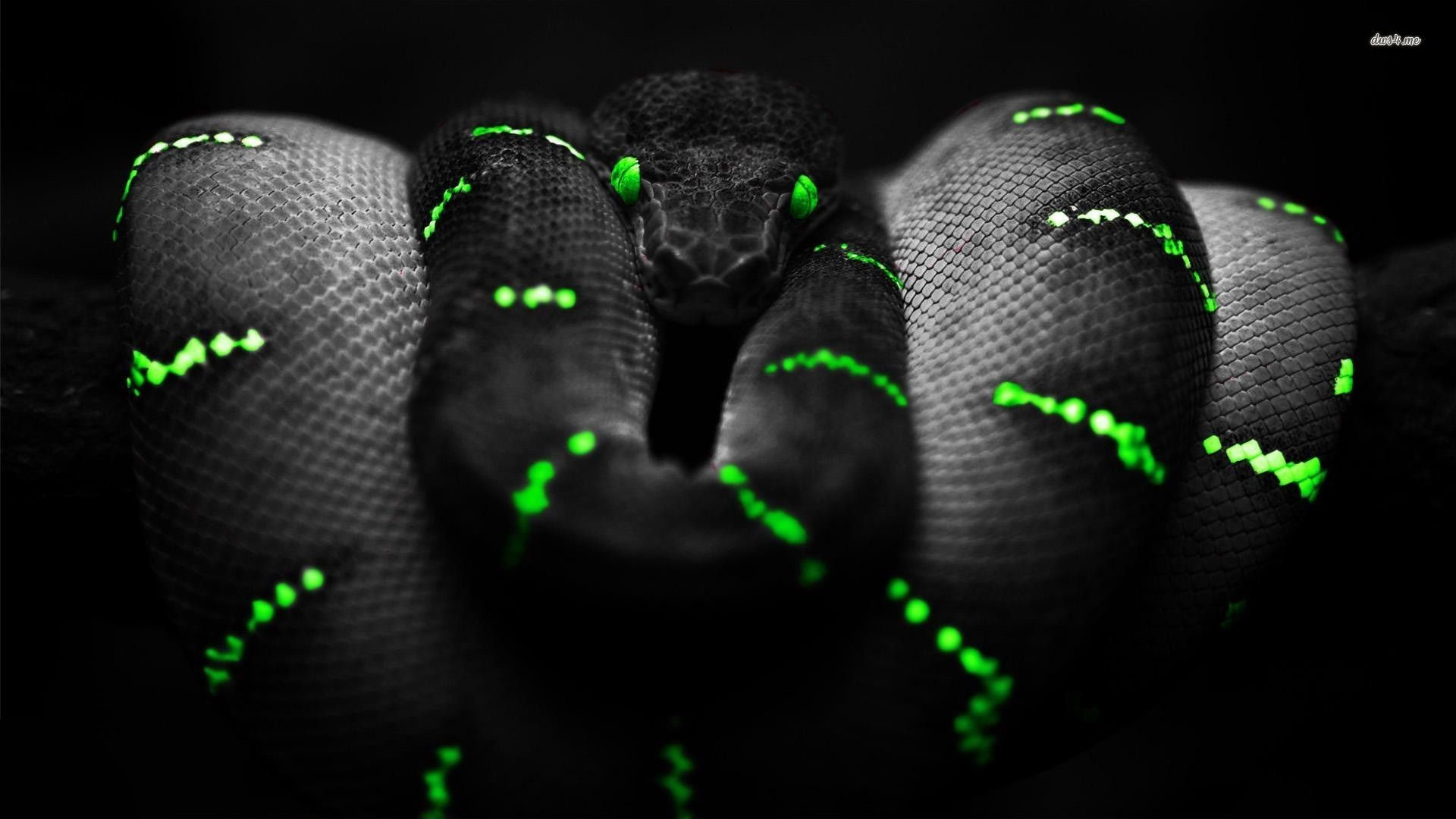 Res: 1920x1080, black-snakes-pictures-download.jpg