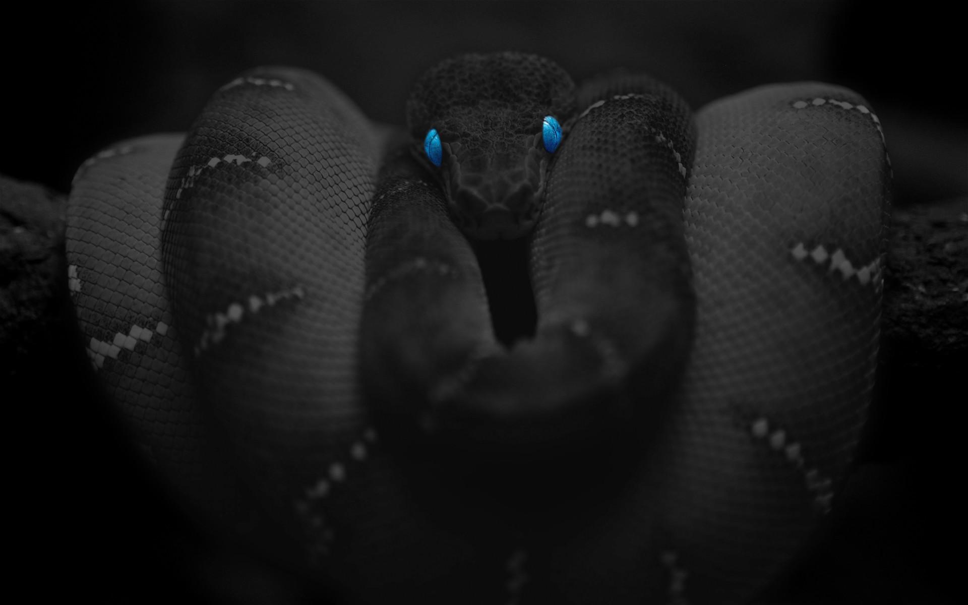 Res: 1920x1200, Animal - Snake Wallpaper