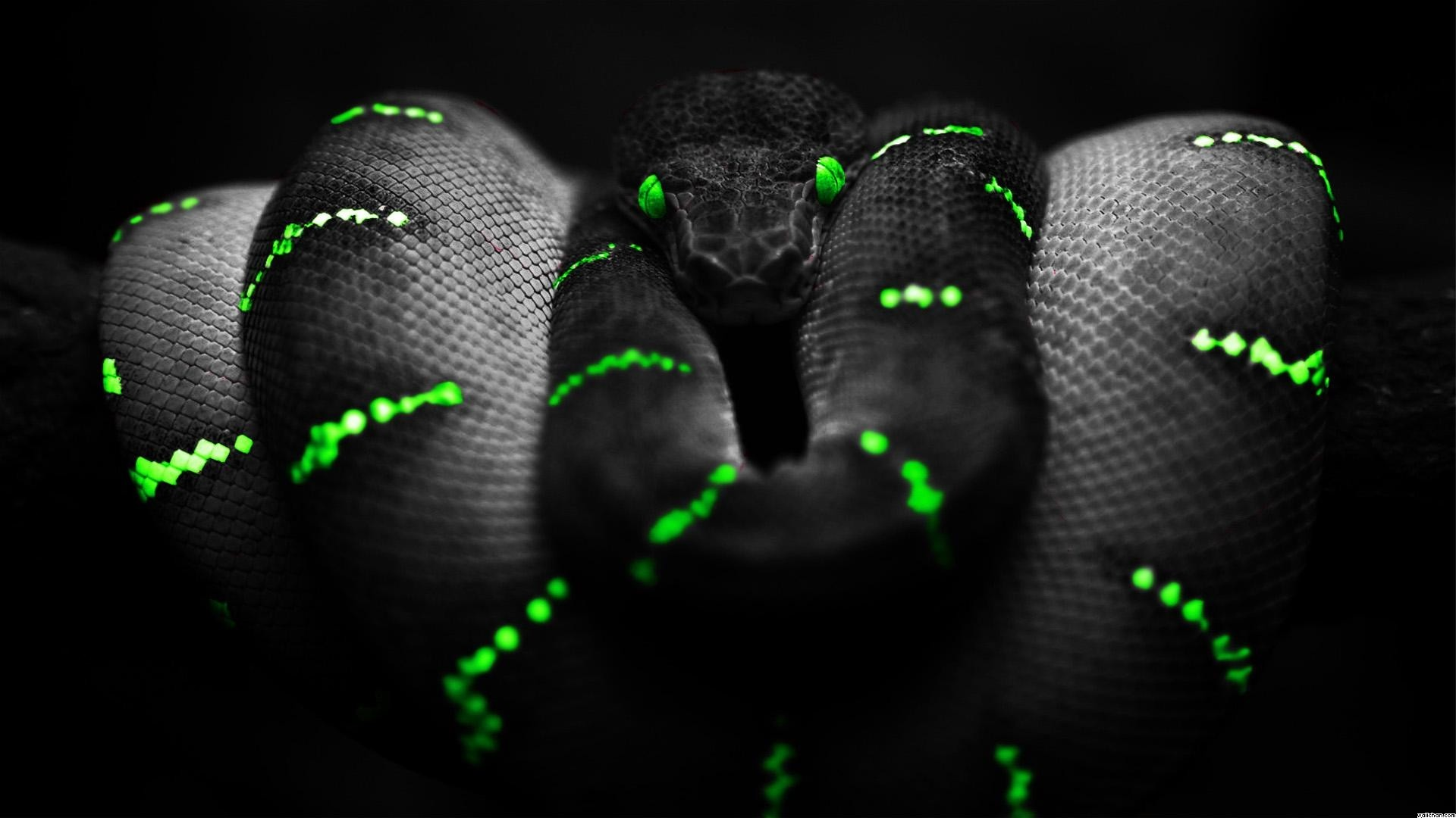 Res: 1920x1080, Green And Black Snake 55 Wide Wallpaper