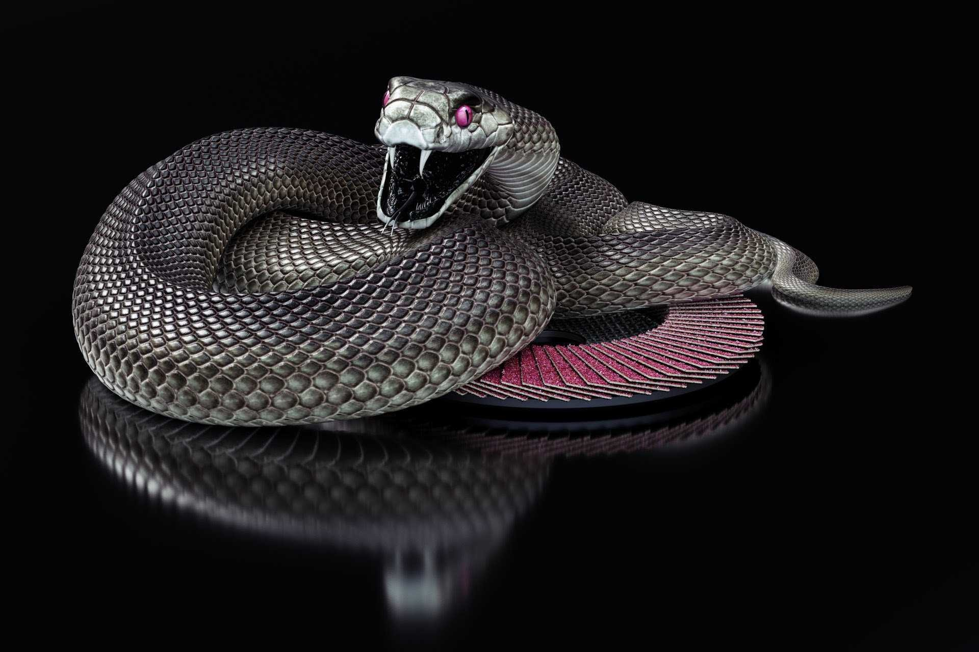 Res: 1920x1280, Black Mamba Snake Wallpaper HD Collection Of Black Snake