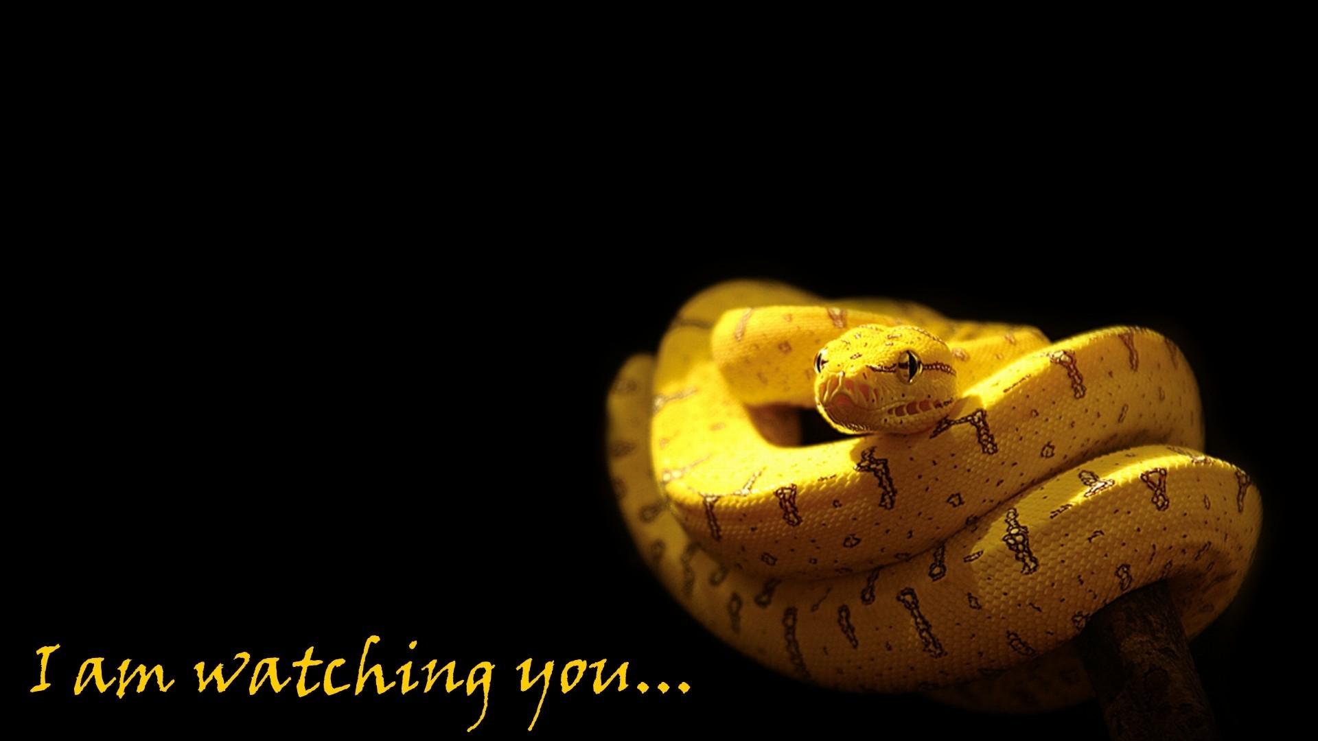 Res: 1920x1080, snakes python wallpaper