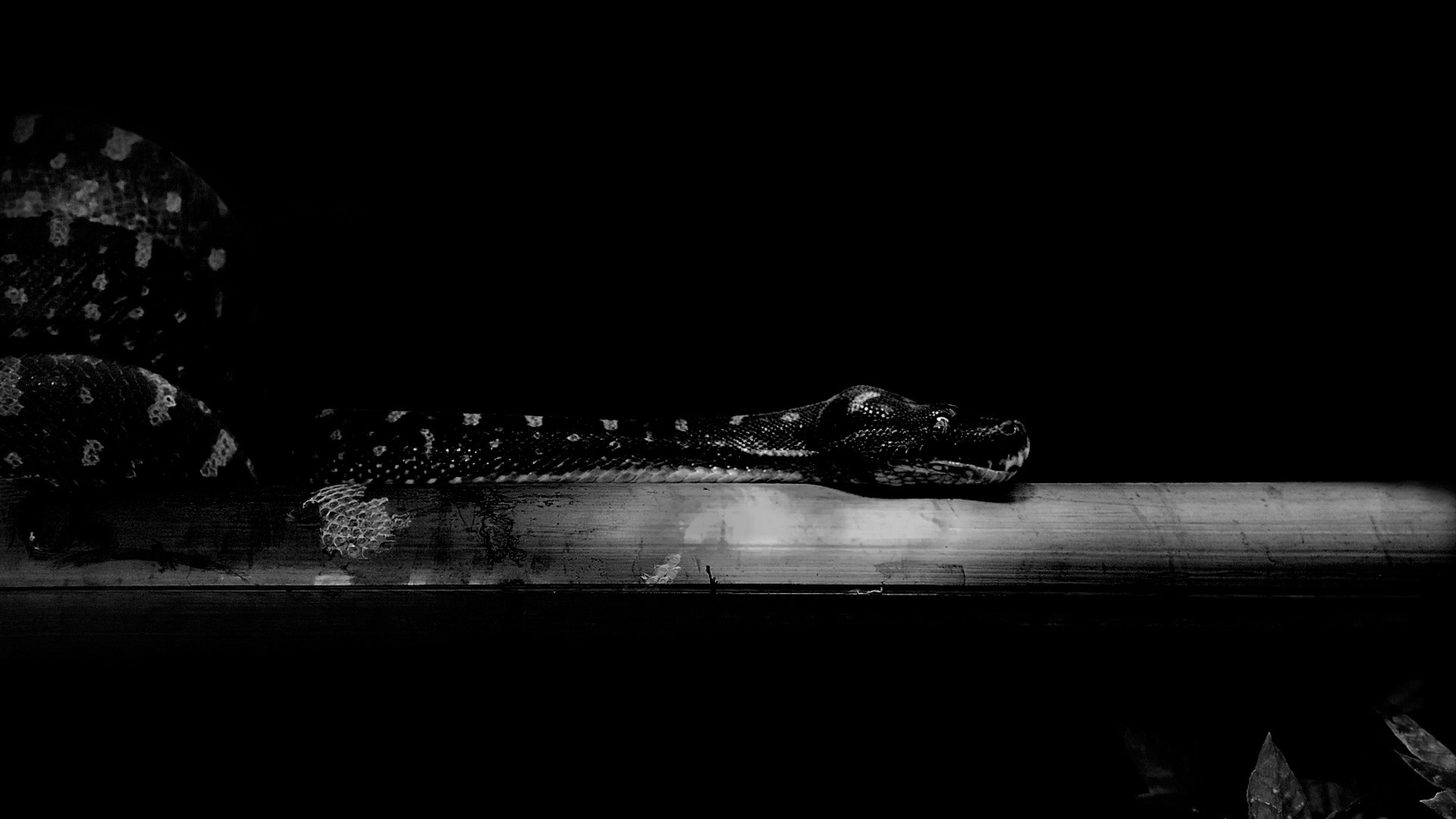Res: 1920x1080, Dark Snake wallpaper
