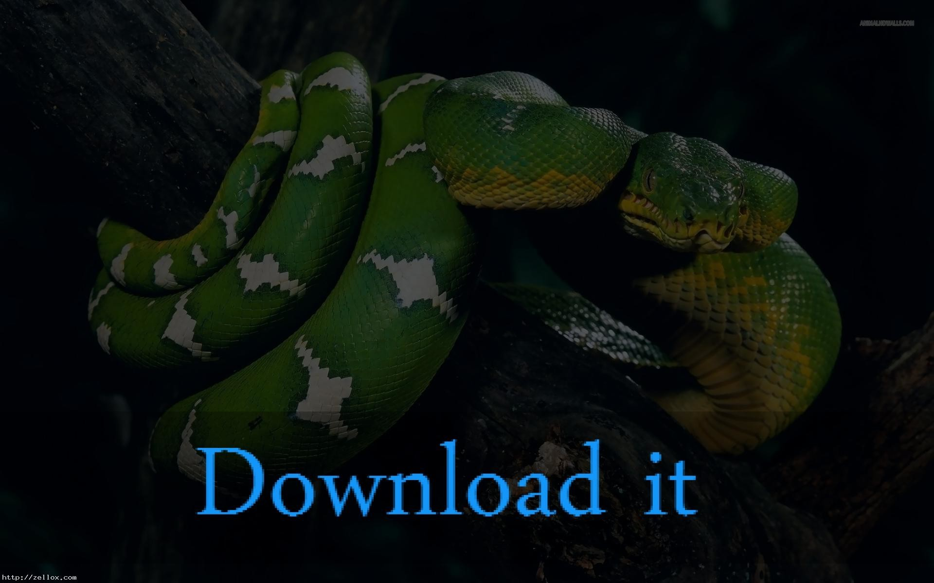 Res: 1920x1200, 1920x1080 Black Snake Wallpapers (42 Wallpapers)