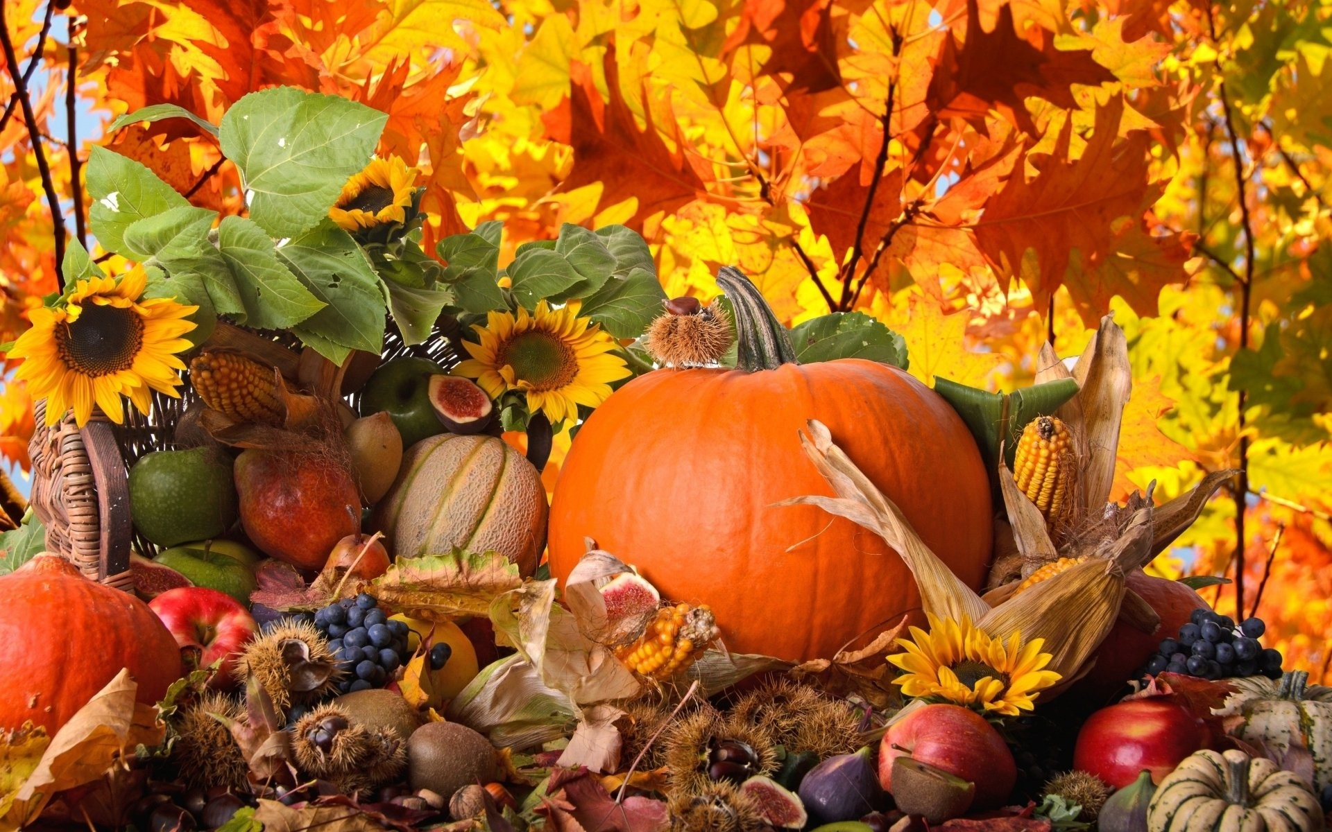 Res: 1920x1200, 69 Thanksgiving HD Wallpapers | Backgrounds - Wallpaper Abyss