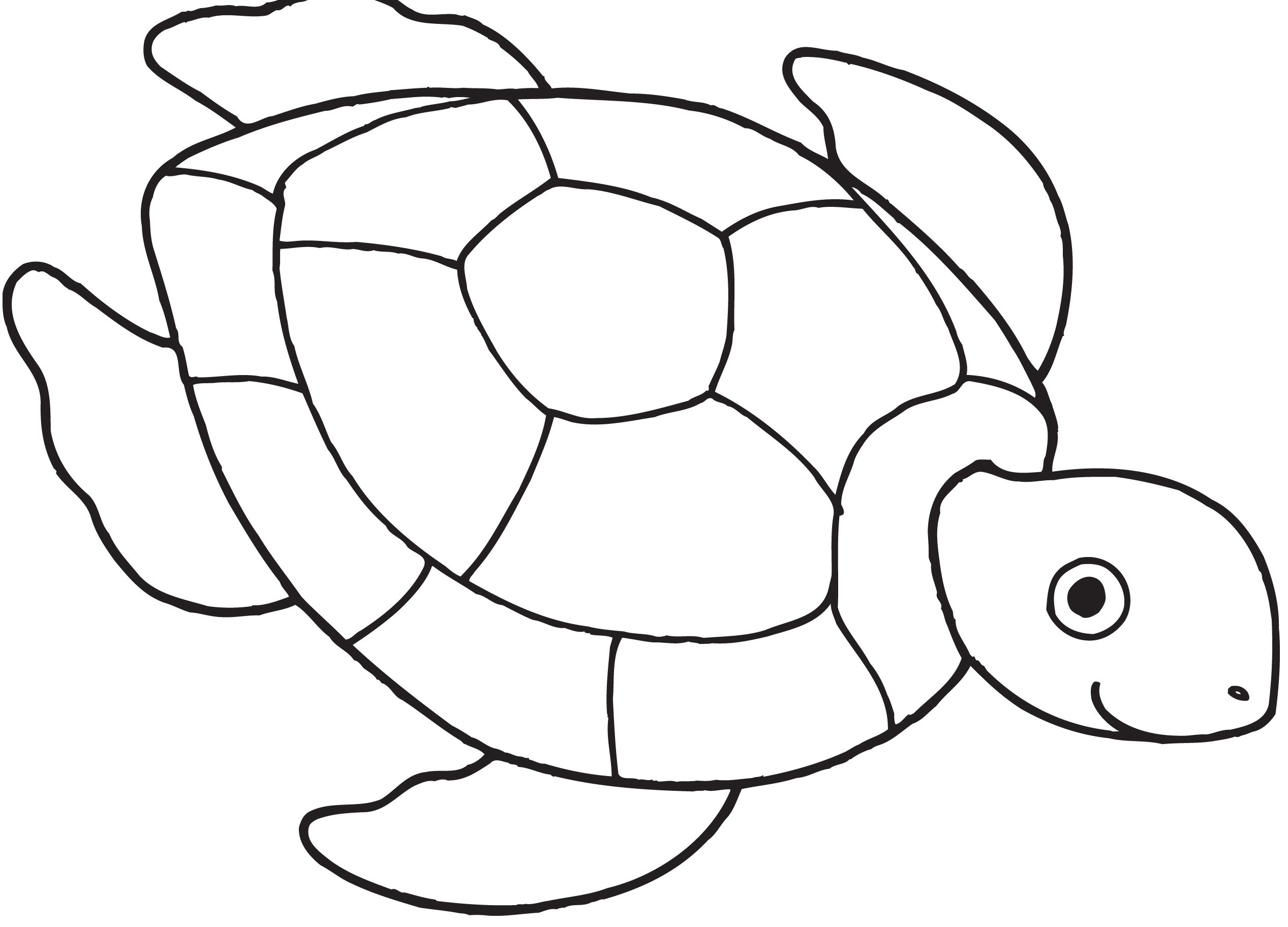 Res: 2534x1824, Fresh Coloring Page Turtle with Wallpapers Dual Screen