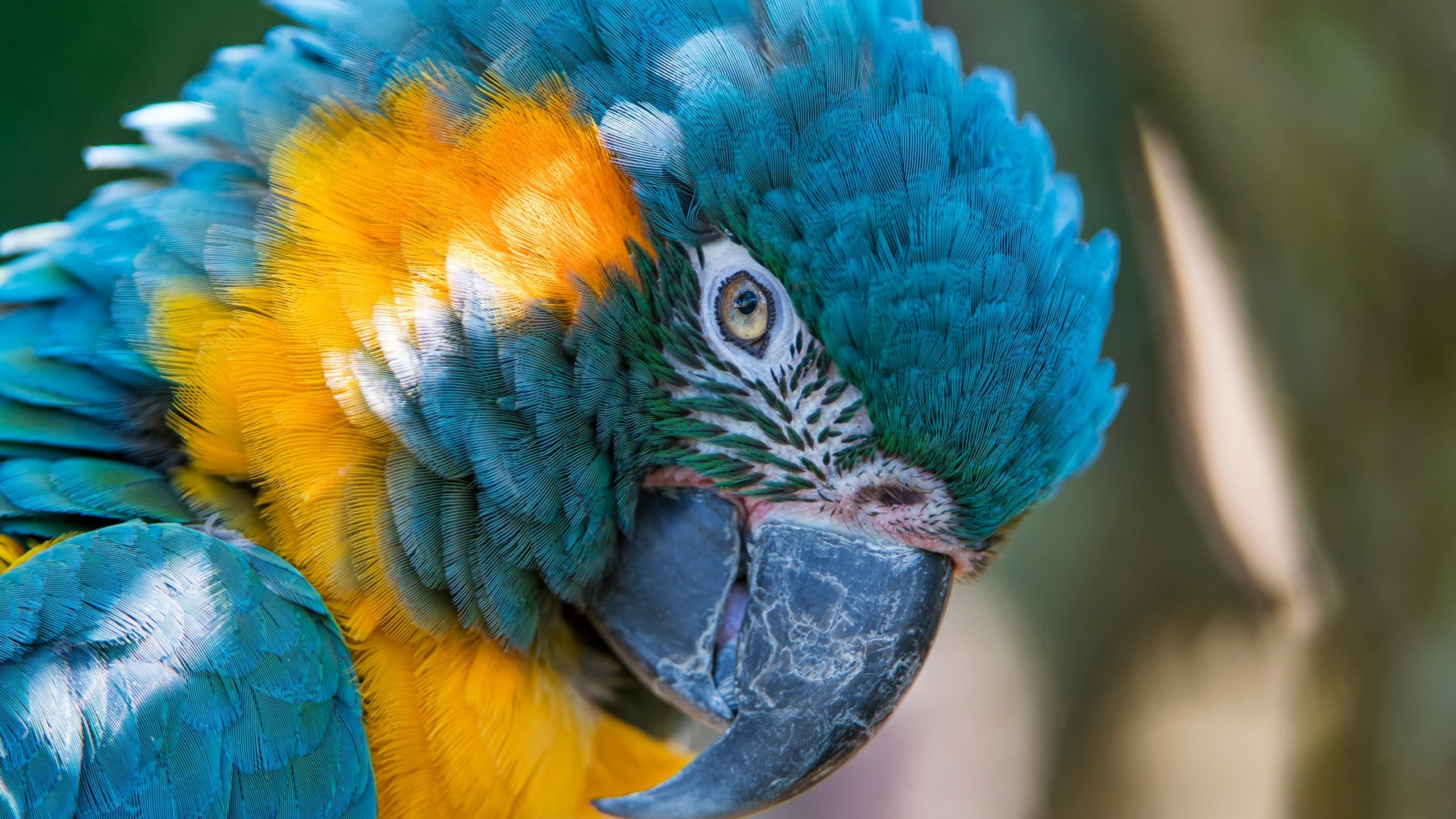 Res: 2560x1440, Animals / Blue-and-yellow macaw Wallpaper