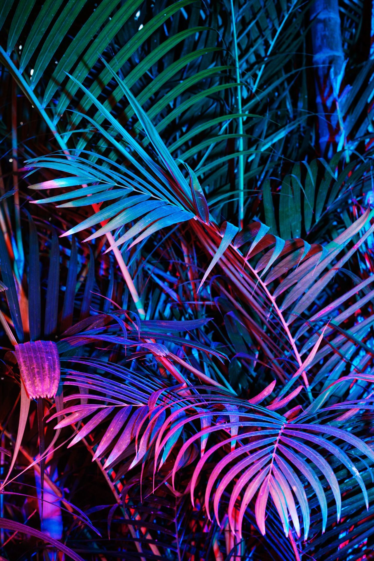 Res: 1280x1920, Pearly Neon Objects Photography More