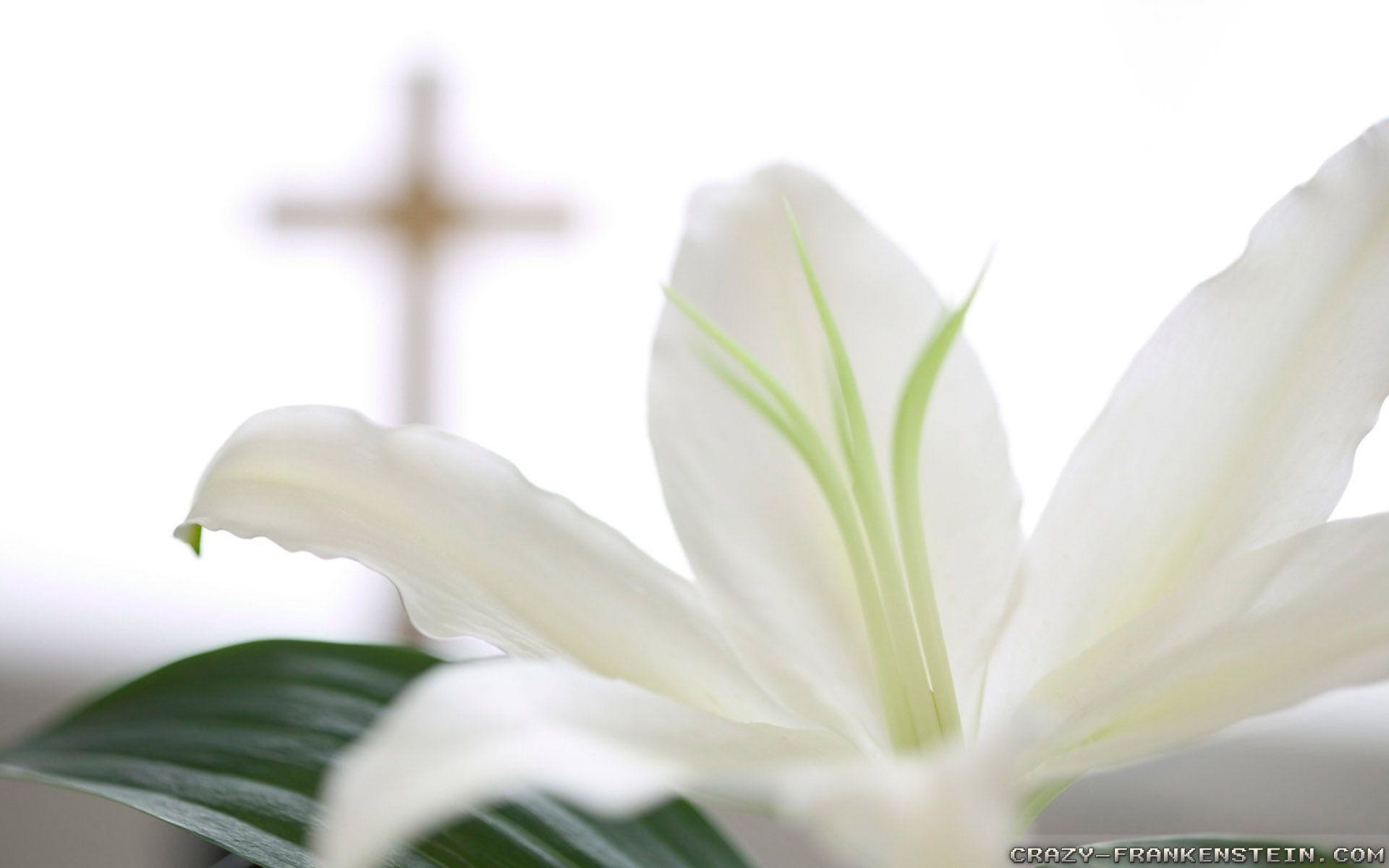 Res: 1920x1200, HD Backgrounds, Religious Easter Wallpaper - , Drusilla Hoose