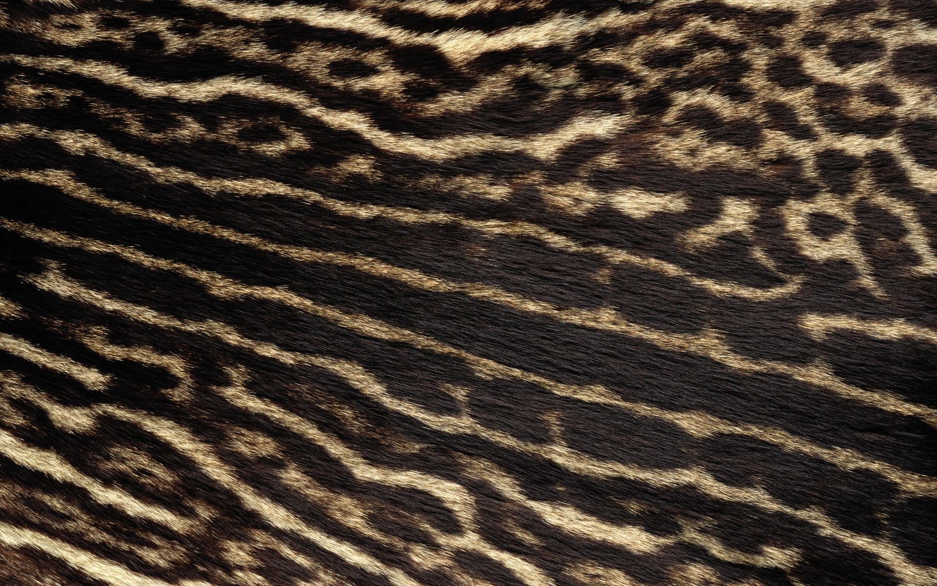 Res: 1920x1200, Real Leopard Fur Wallpaper