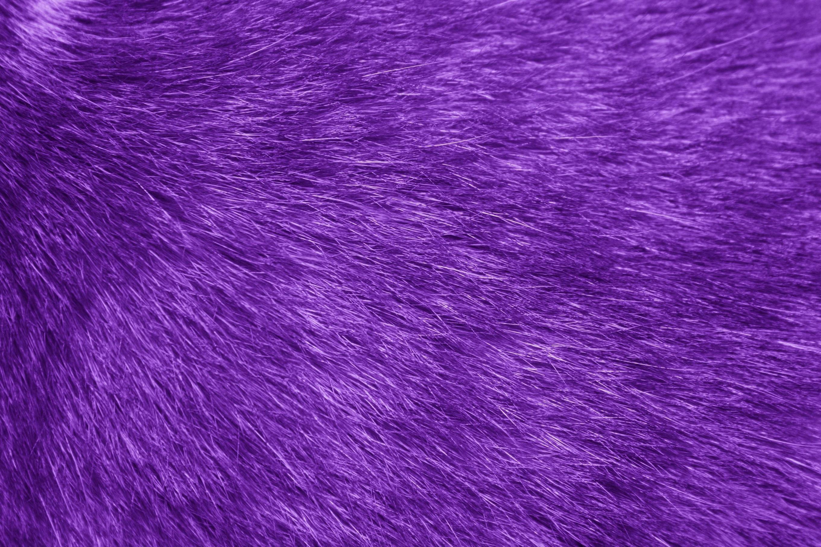 Res: 2722x1814,  Fur Texture Purple Picture | Free Photograph | Photos Public  Domain